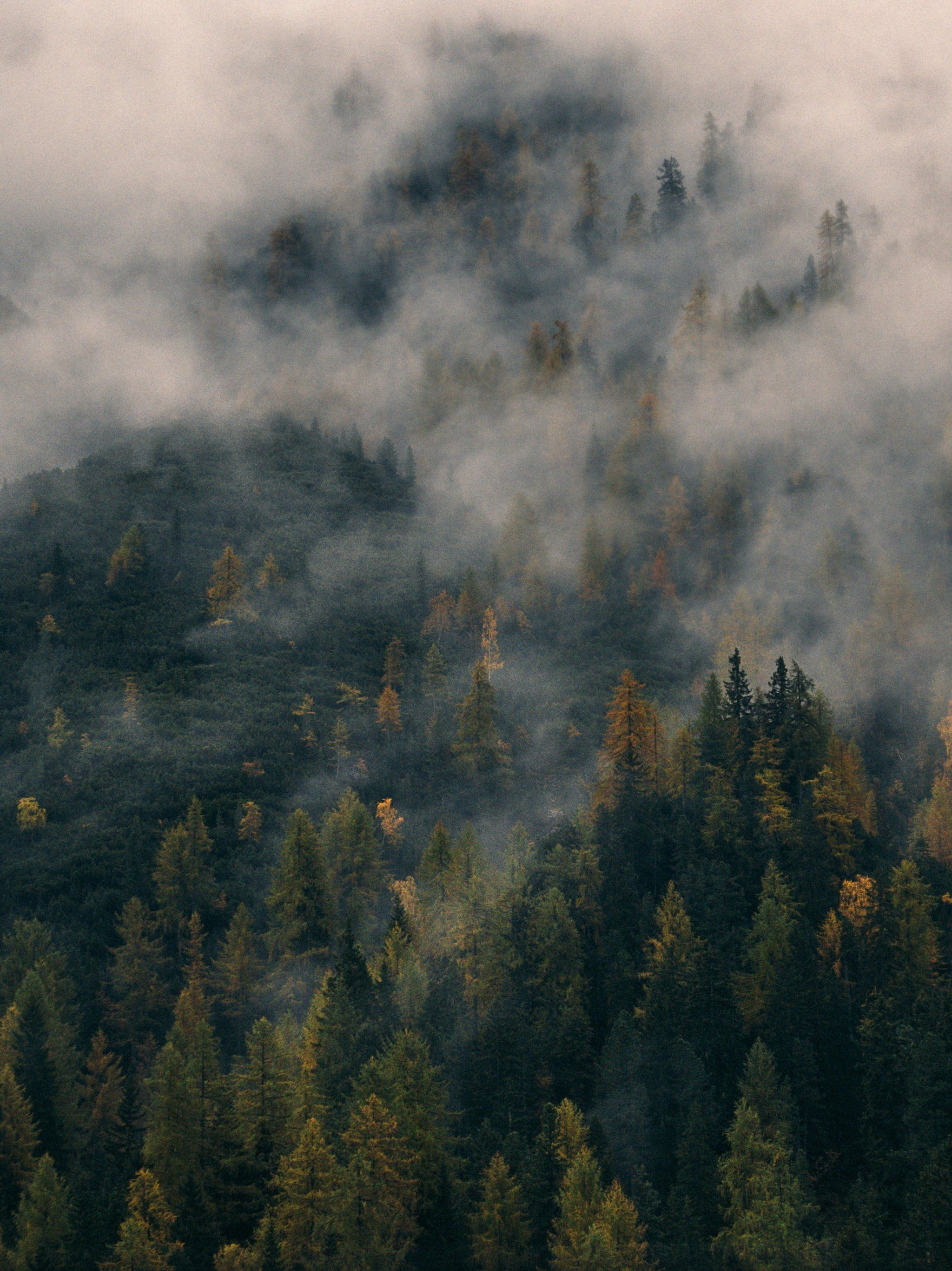 Foggy Forest Wallpapers Top Free Foggy Forest Backgrounds