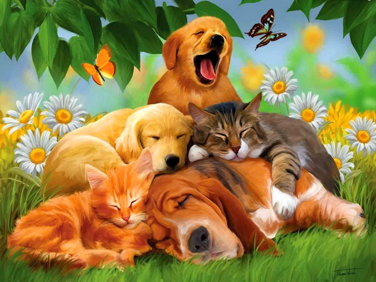 Hd Animals Wallpapers Top Free Hd Animals Backgrounds Wallpaperaccess