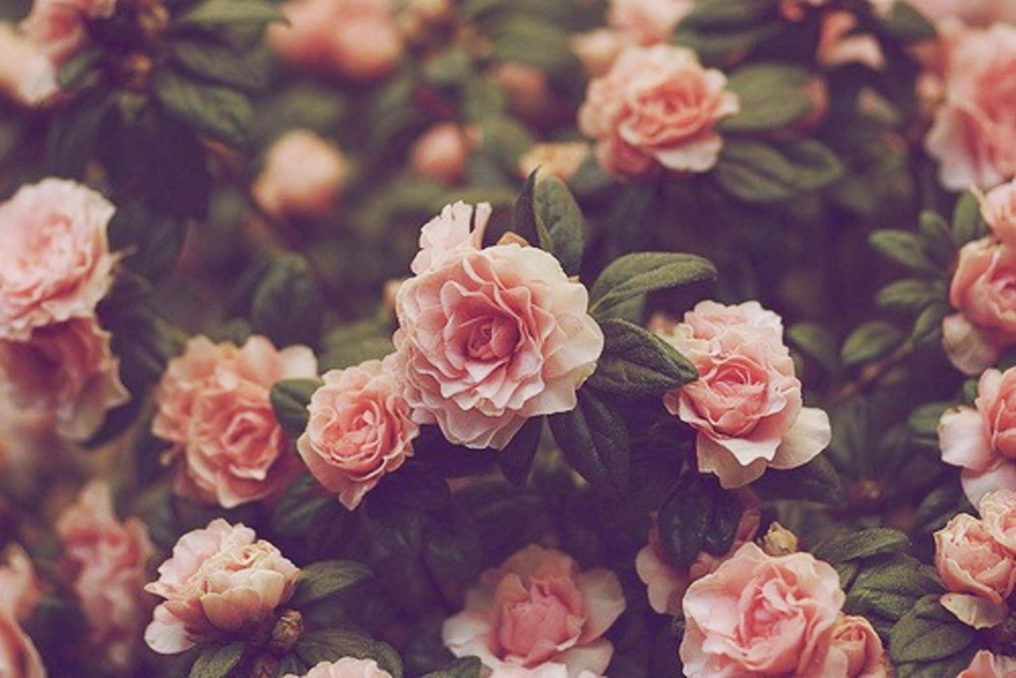 Pink Floral Background Hd