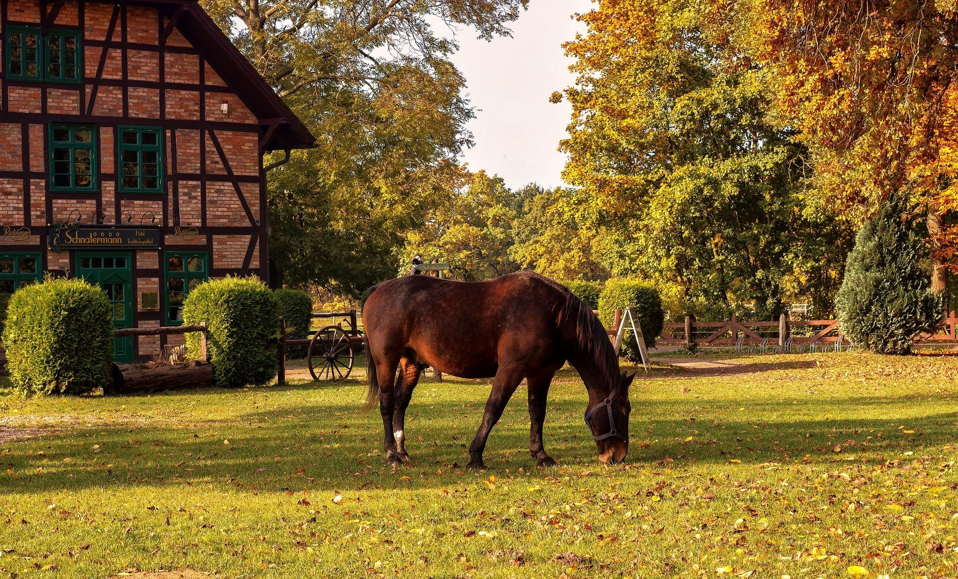 Horse Farm Wallpapers Top Free Horse Farm Backgrounds Wallpaperaccess