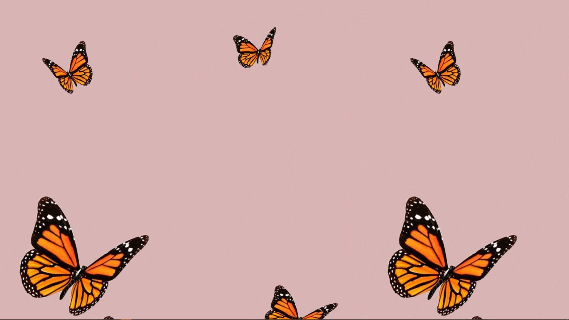 1920x1080 nền bướm.  Hình nền máy tính dễ thương, Hình nền máy tính hình nền máy tính, Hình nền laptop dễ thương