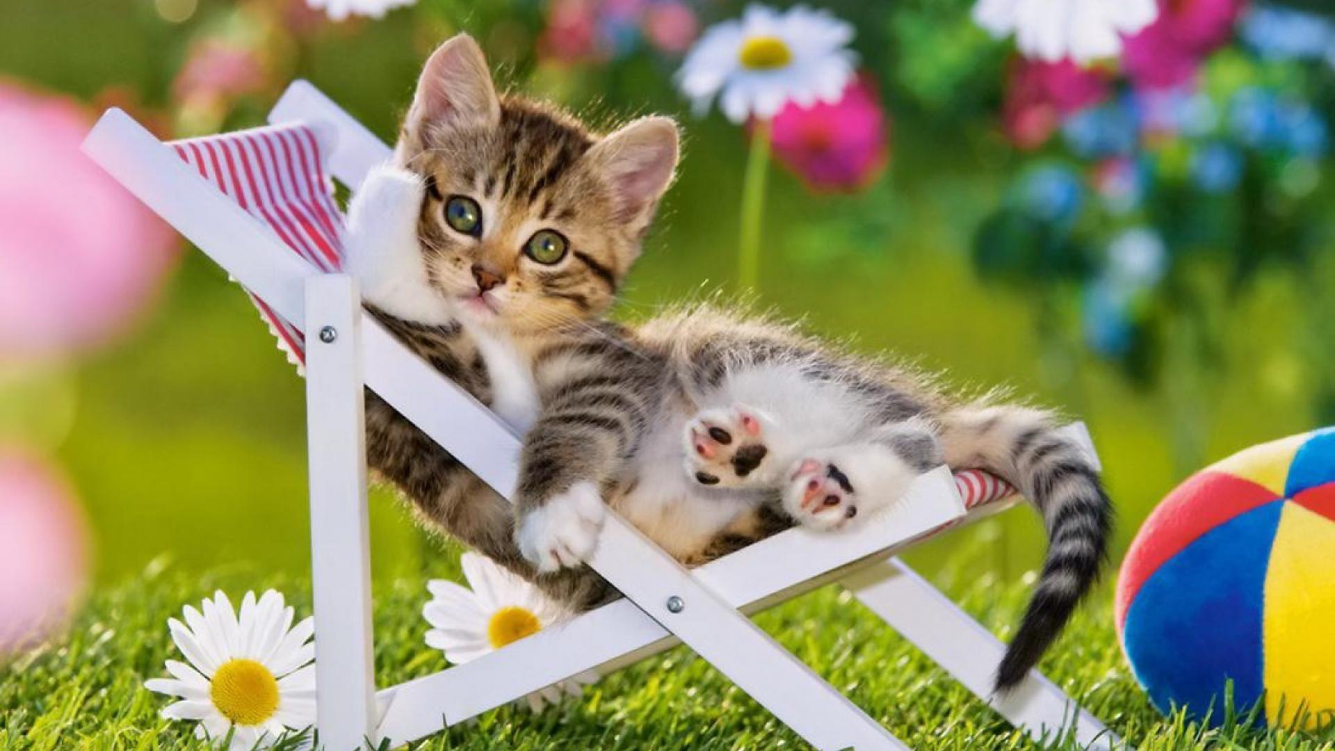 Summer Cat Wallpapers Top Free Summer Cat Backgrounds Wallpaperaccess