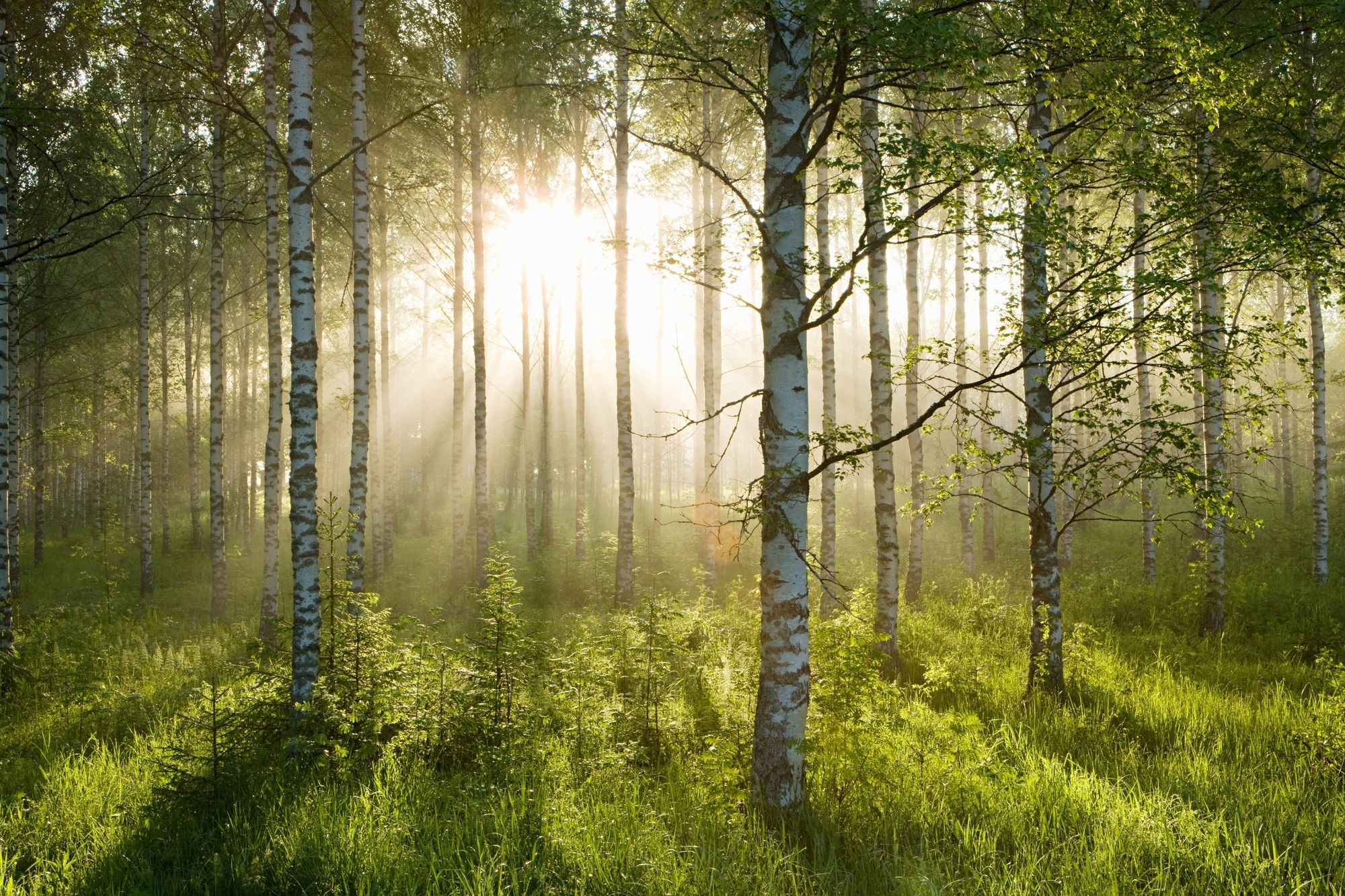 Woodland Wallpapers Top Free Woodland Backgrounds Wallpaperaccess