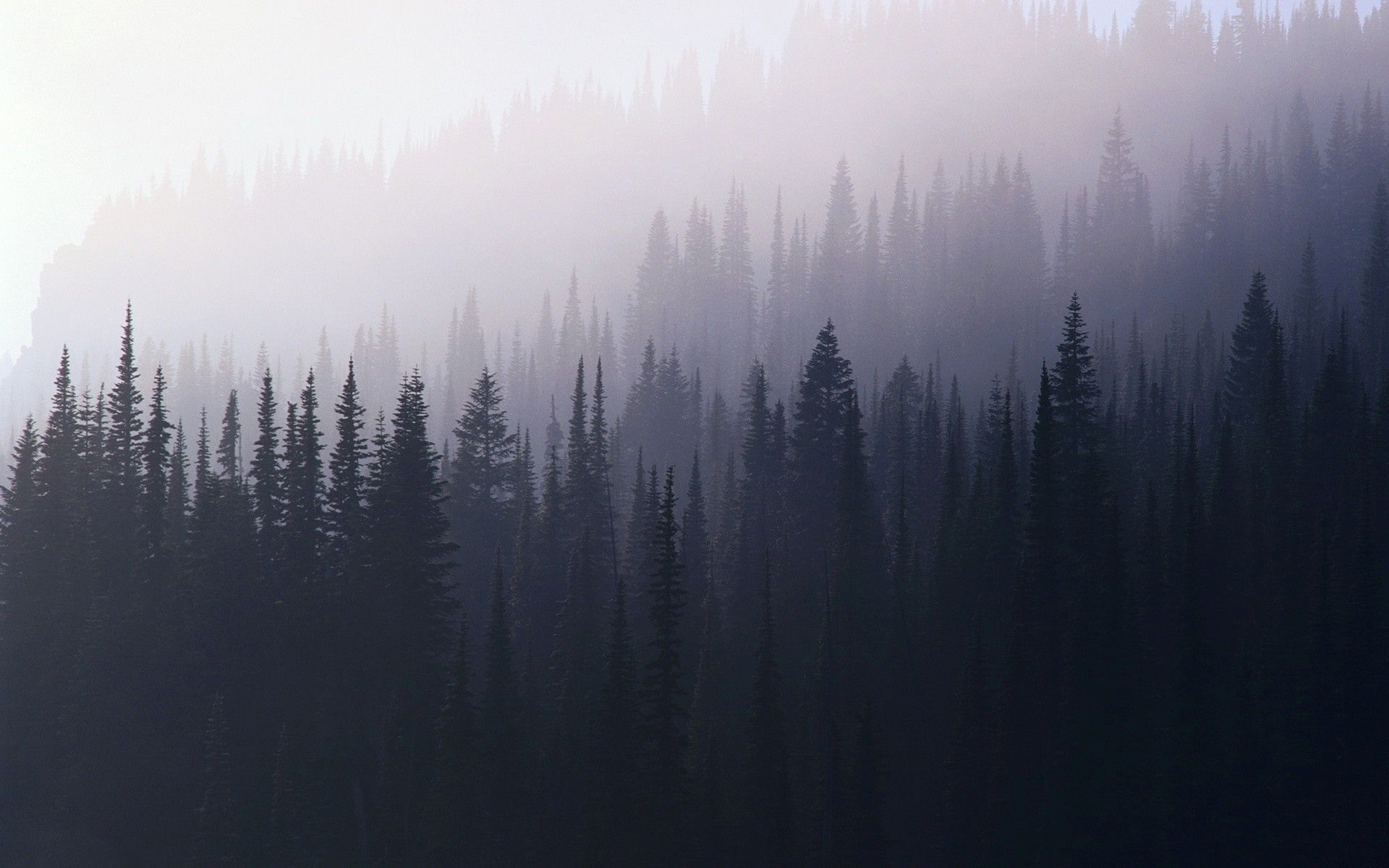 Foggy Forest Wallpapers Top Free Foggy Forest