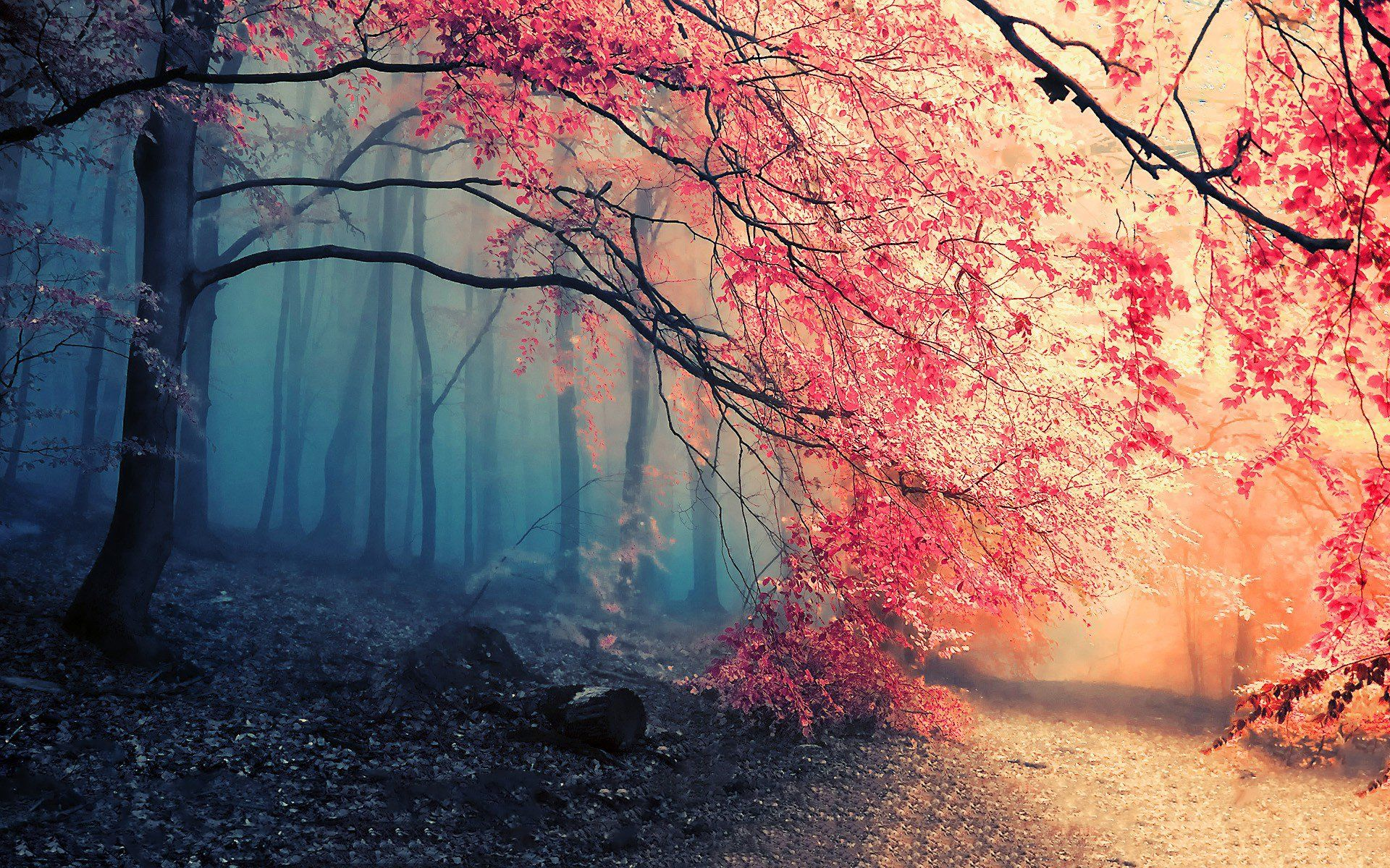 HD Wallpapers - Top Free HD Backgrounds