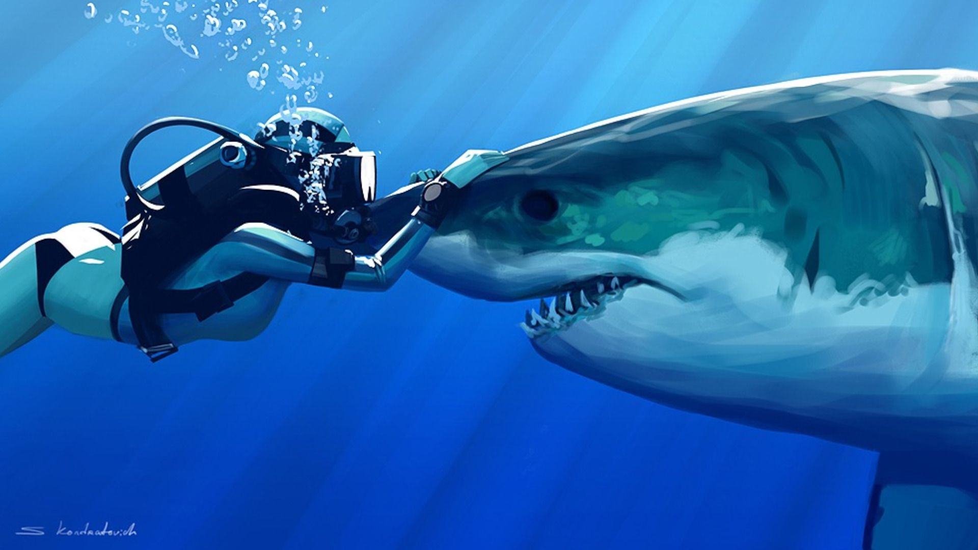 Cool Shark Wallpapers Top Free Cool Shark Backgrounds