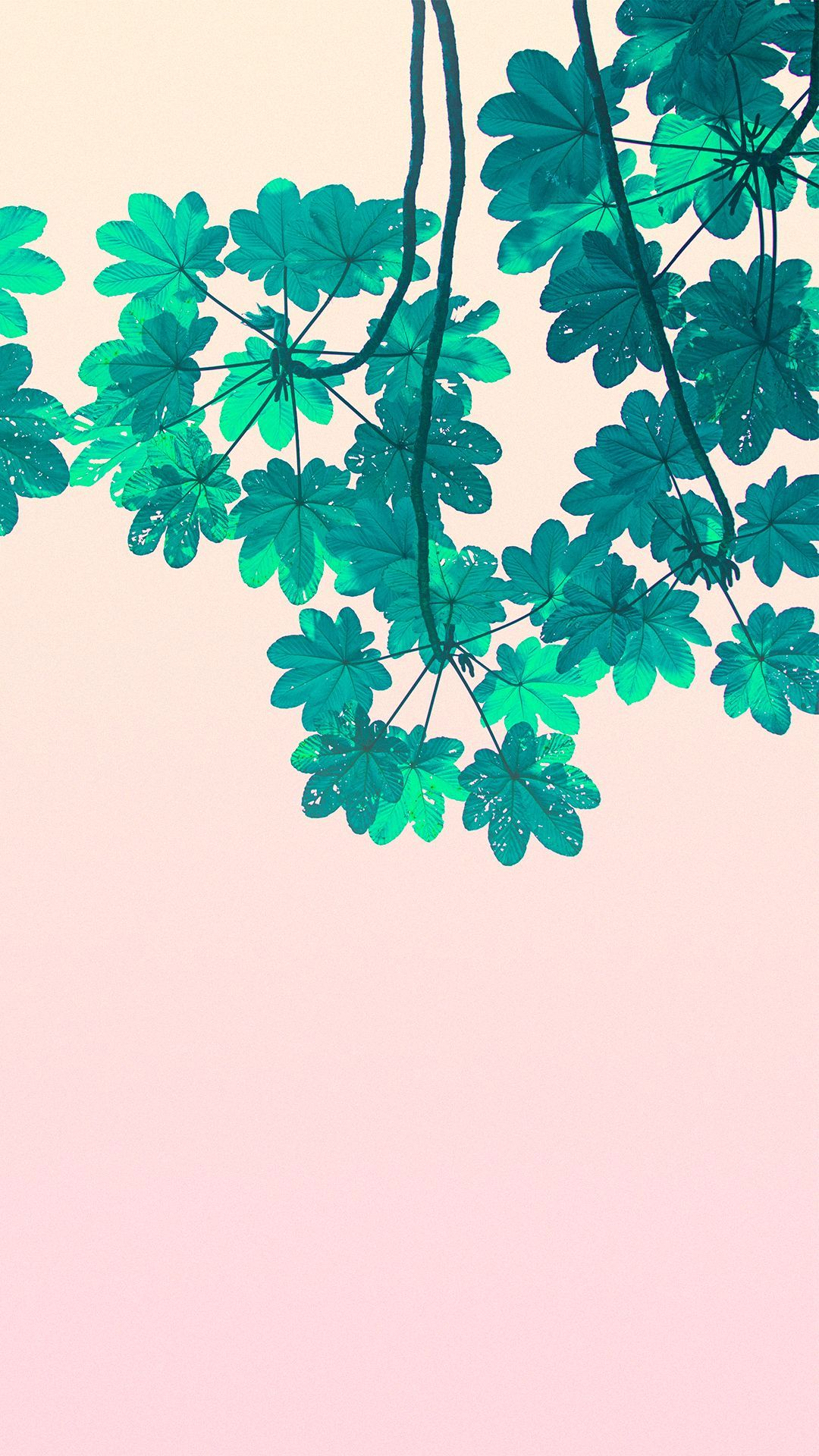 plant aesthetic wallpapers