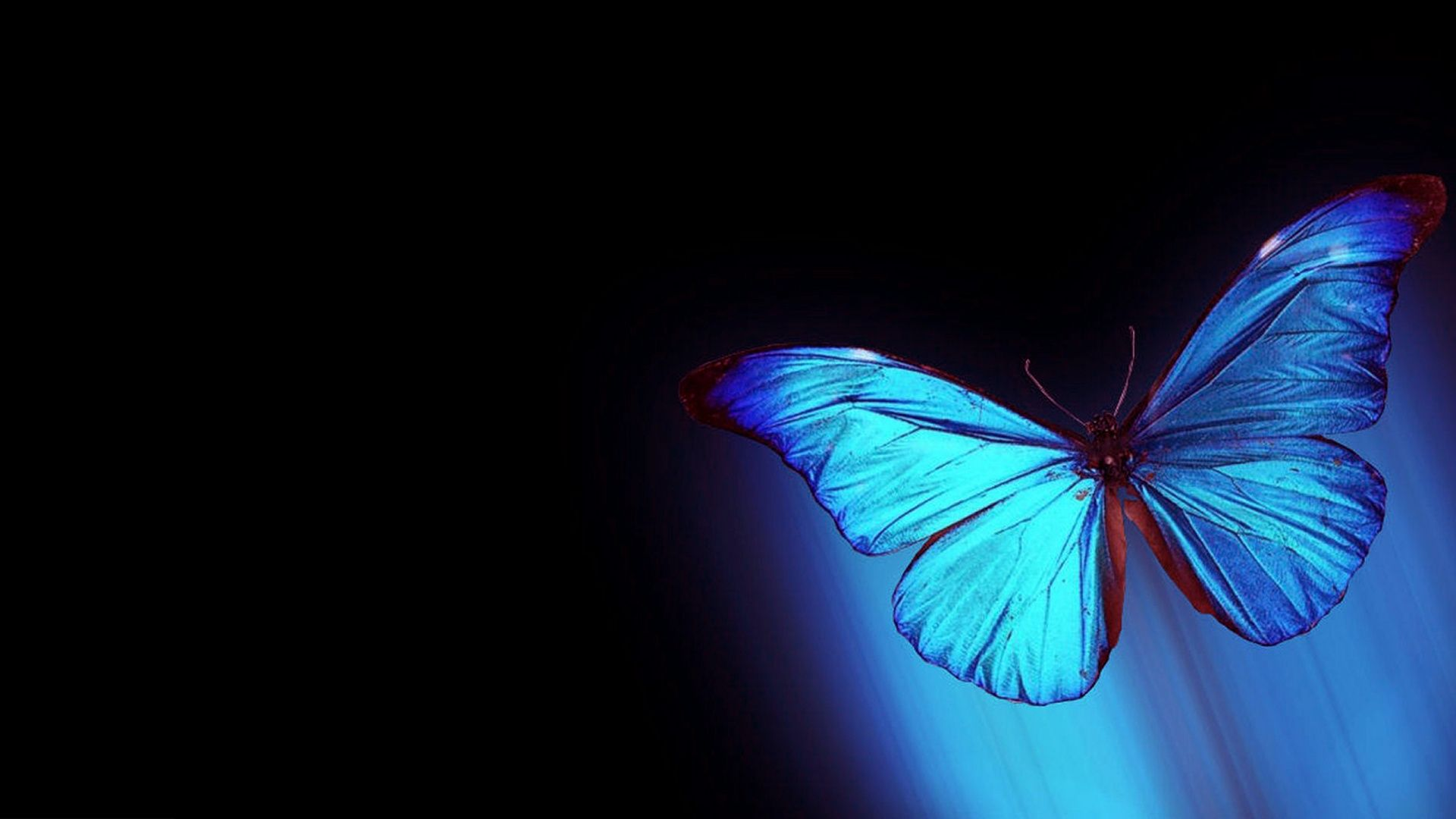 Animated Butterfly Hd Wallpapers Top Free Animated Butterfly Hd Backgrounds Wallpaperaccess
