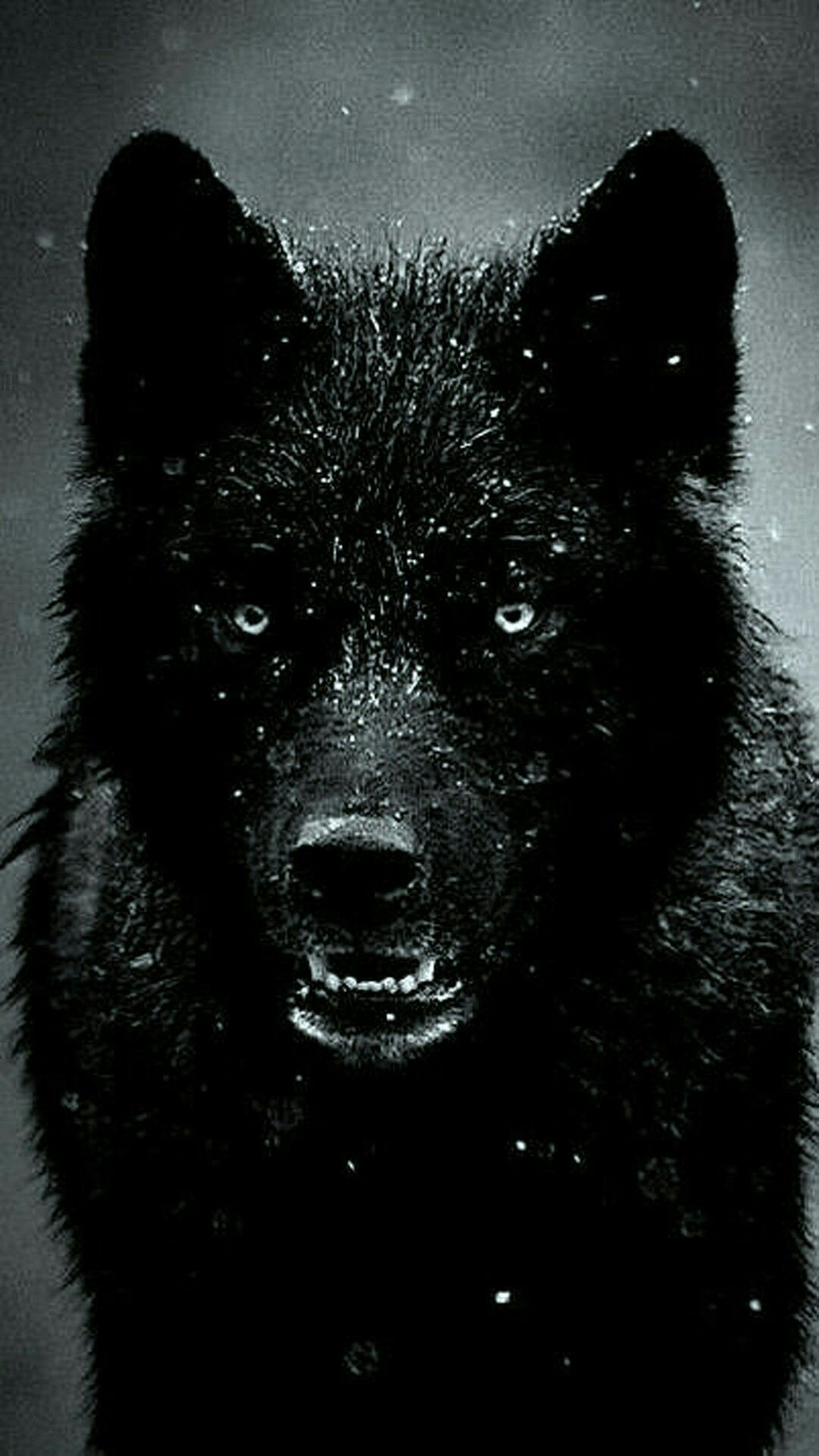 Cool Black Wolf Iphone Wallpapers Top Free Cool Black Wolf Iphone Backgrounds Wallpaperaccess