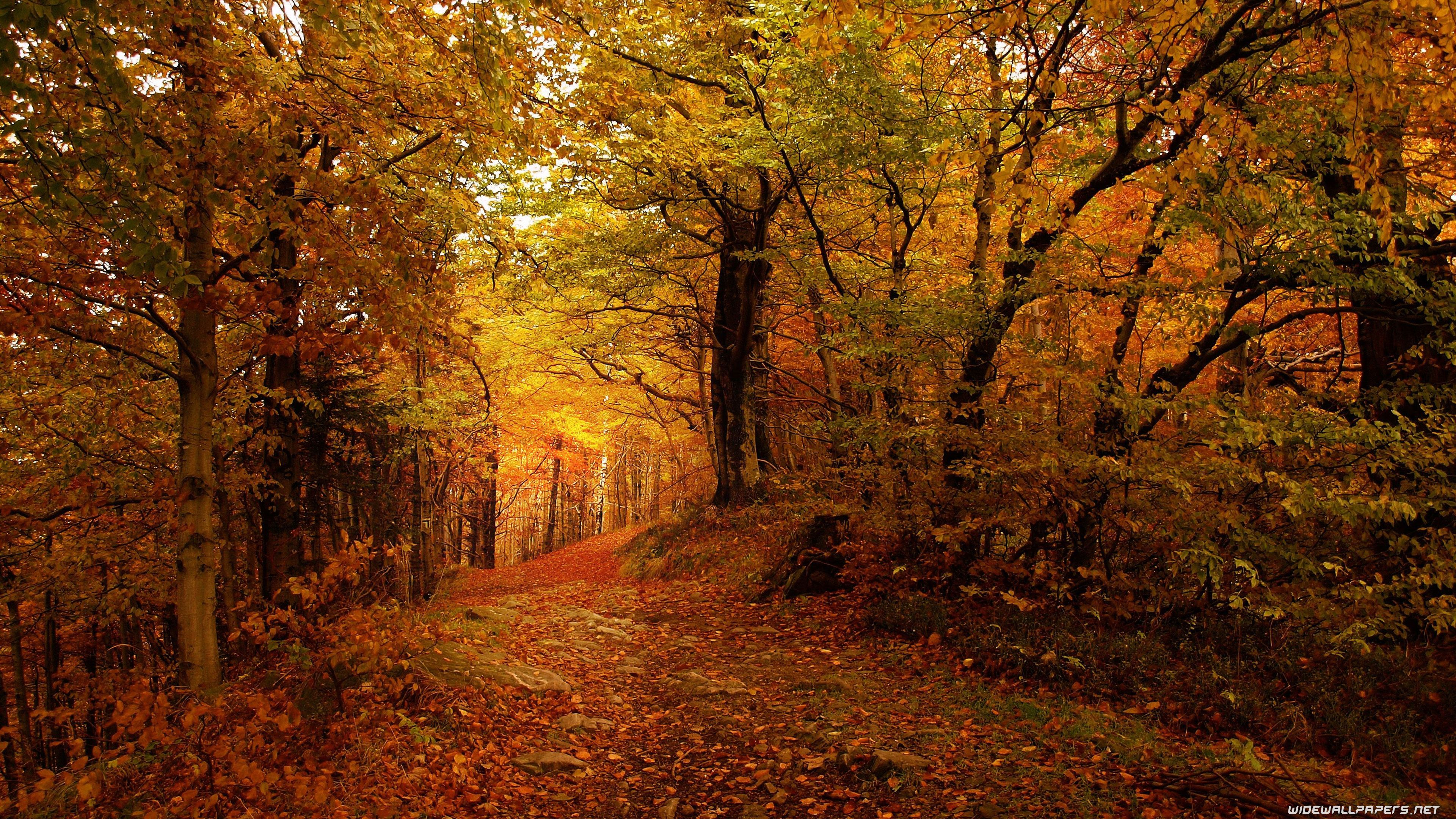 Ultra HD Autumn Wallpapers - Top Free Ultra HD Autumn ...
