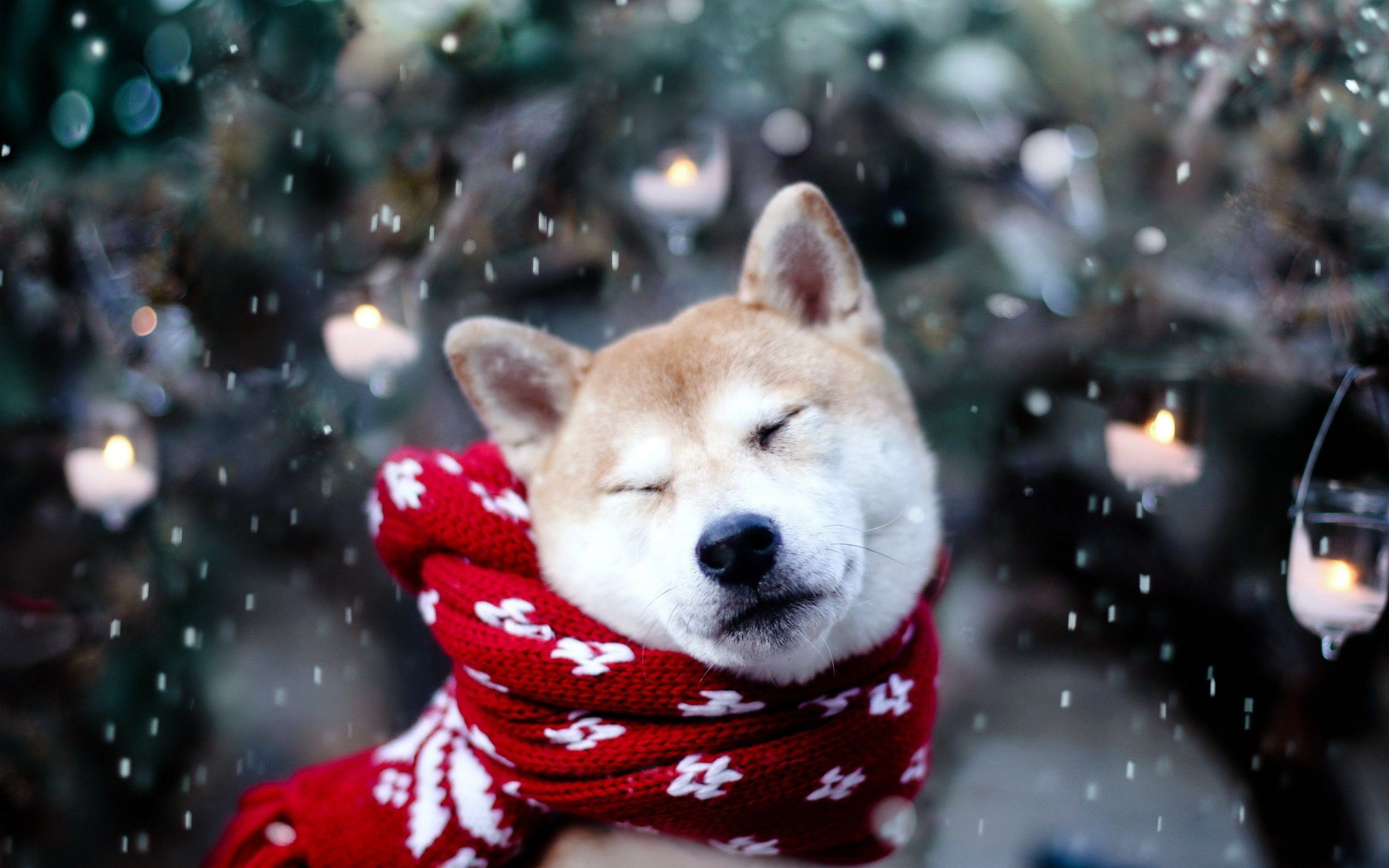 Cute Winter Animal Wallpapers Top Free Cute Winter Animal Backgrounds Wallpaperaccess