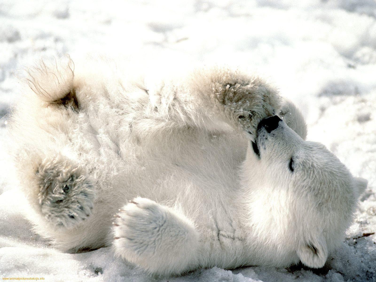 Winter Animal Wallpapers Top Free Winter Animal