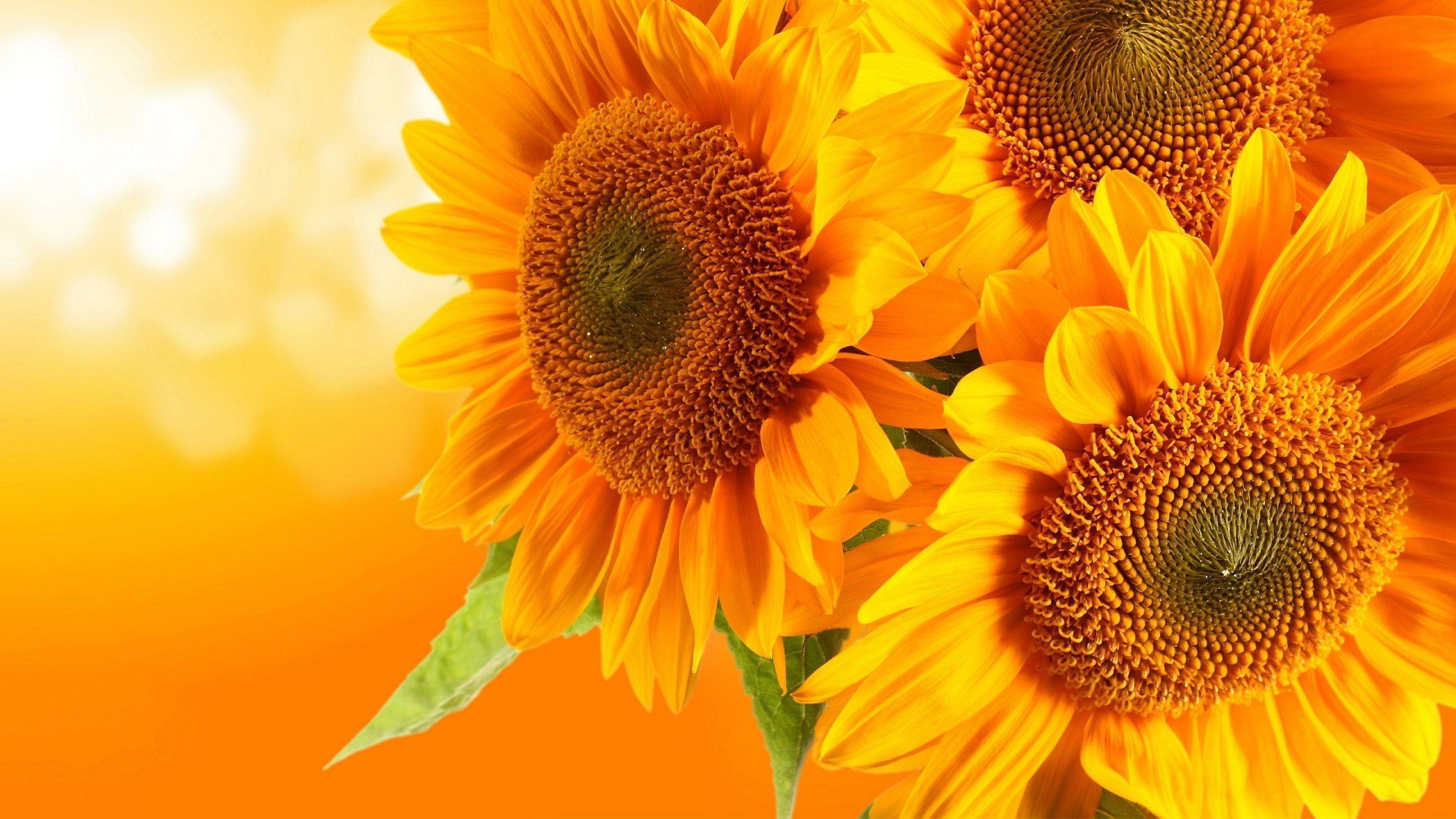 Whimsical Sunflower Desktop Wallpapers - Top Free ...
