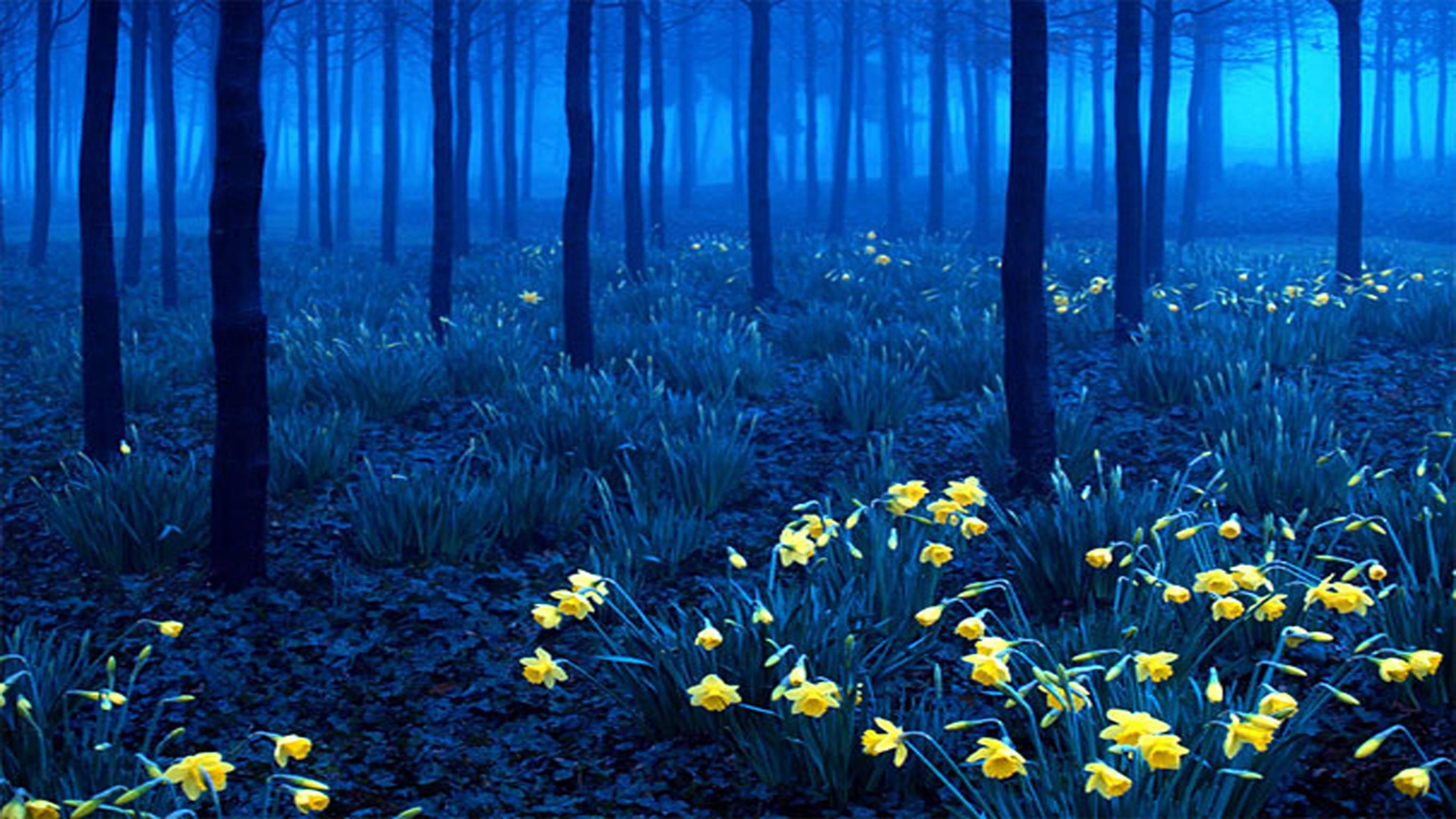Blue Forest Wallpapers Top Free Blue Forest Backgrounds