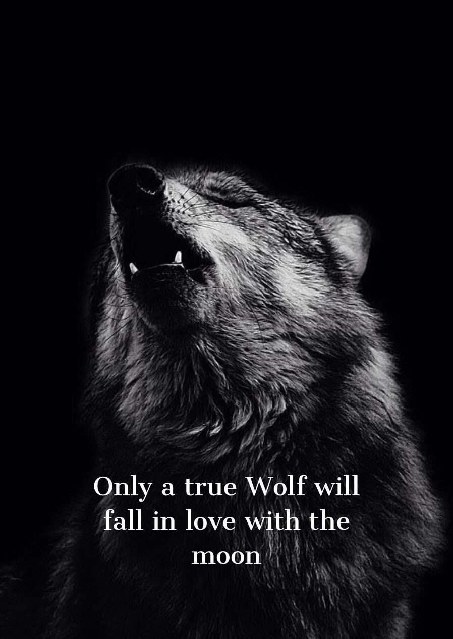 Wolf Quotes Wallpapers - Top Free Wolf Quotes Backgrounds