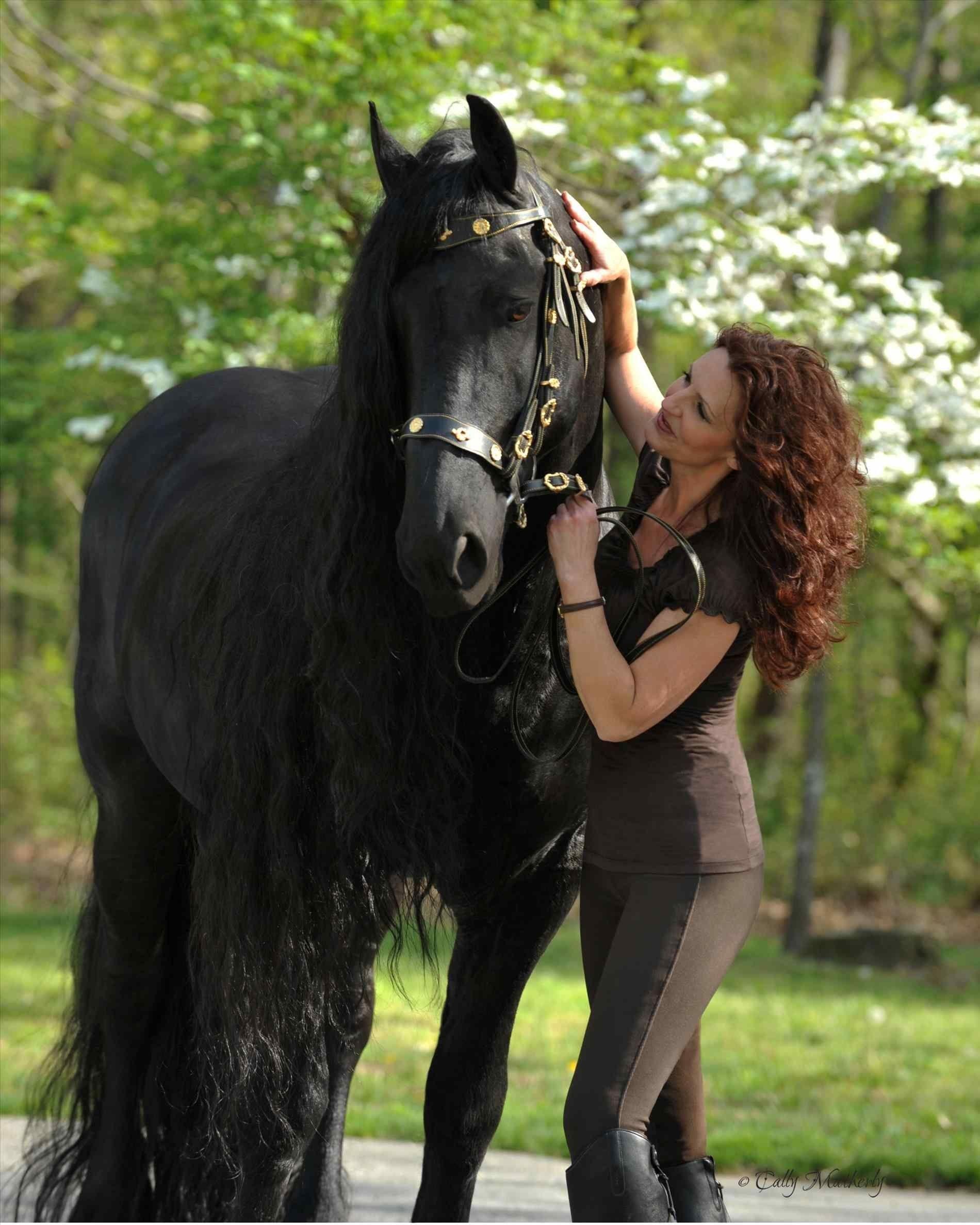Friesian Horse Wallpapers Top Free Friesian Horse Backgrounds Wallpaperaccess