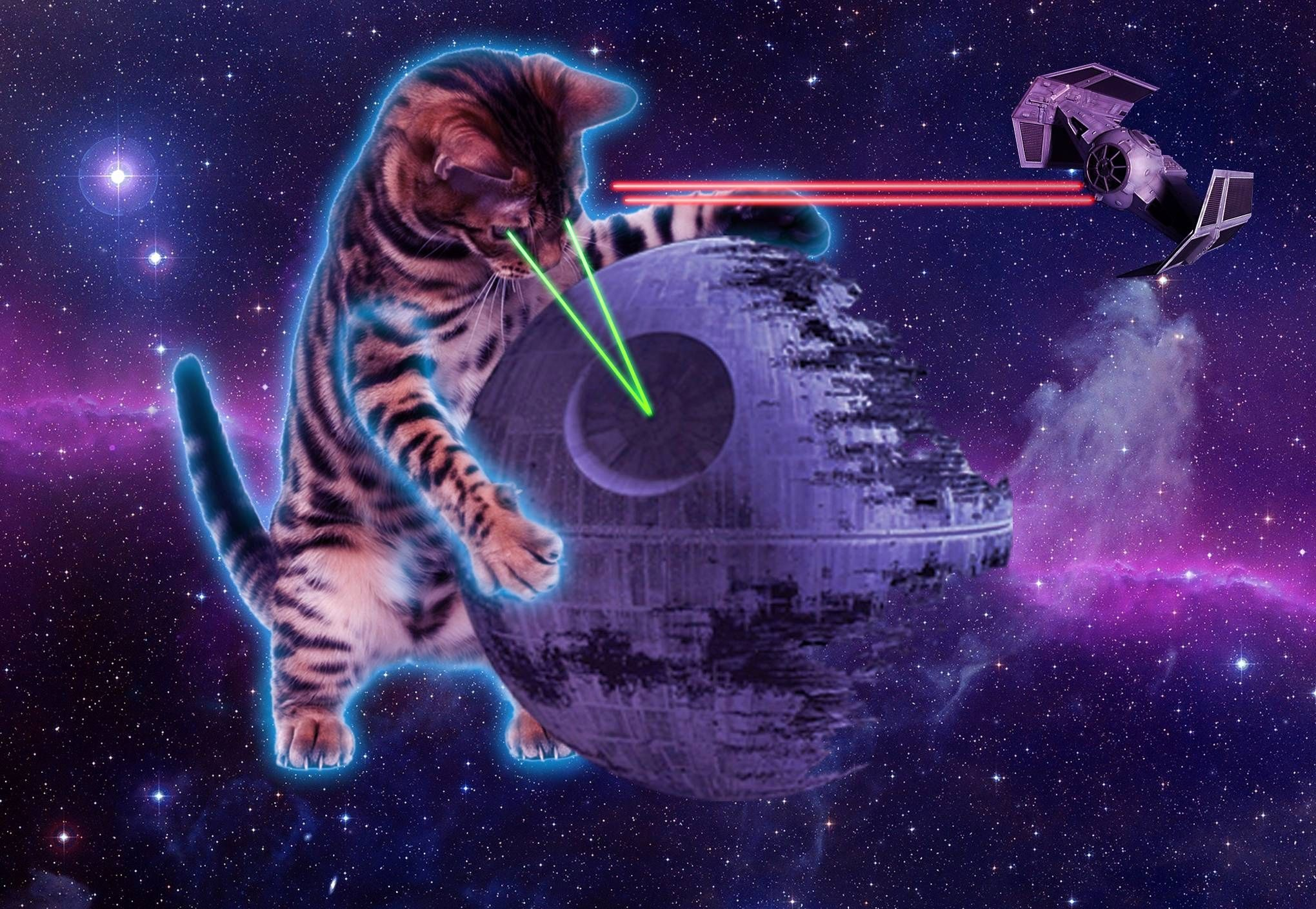 Cool Galaxy Cat Wallpapers Top Free Cool Galaxy Cat Backgrounds Wallpaperaccess