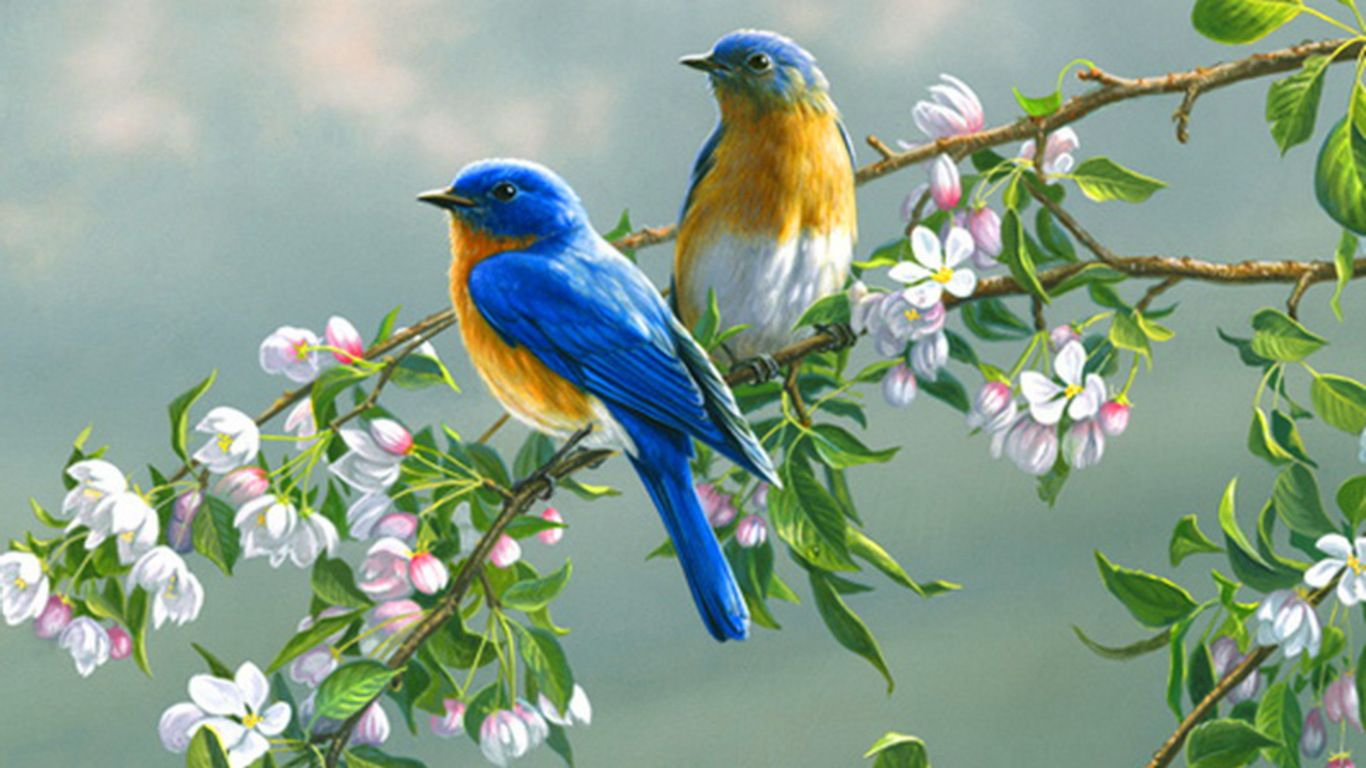 Colorful Birds Wallpapers Top Free Colorful Birds Backgrounds Wallpaperaccess