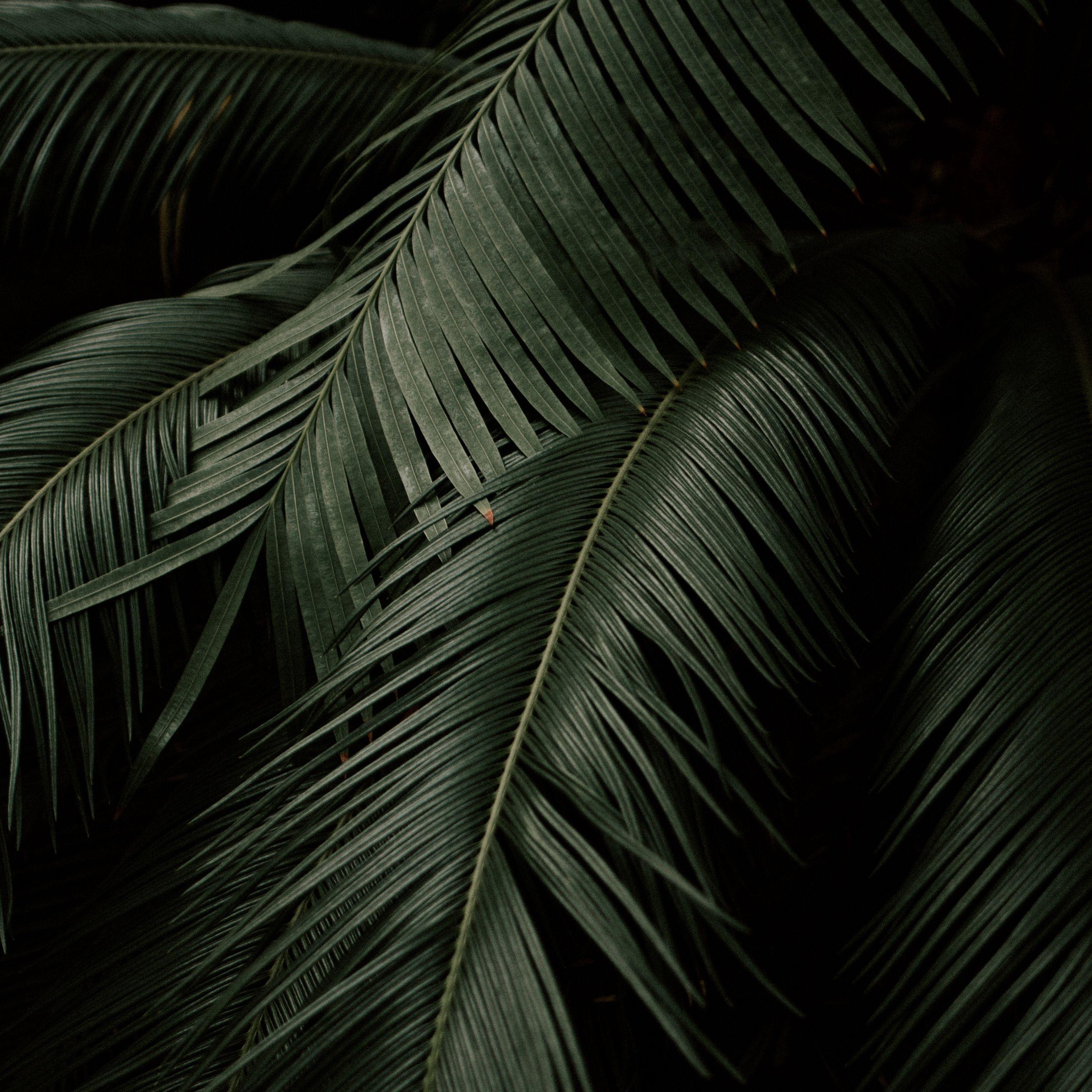 Minimalist Plant Desktop Wallpapers - Top Free Minimalist ...