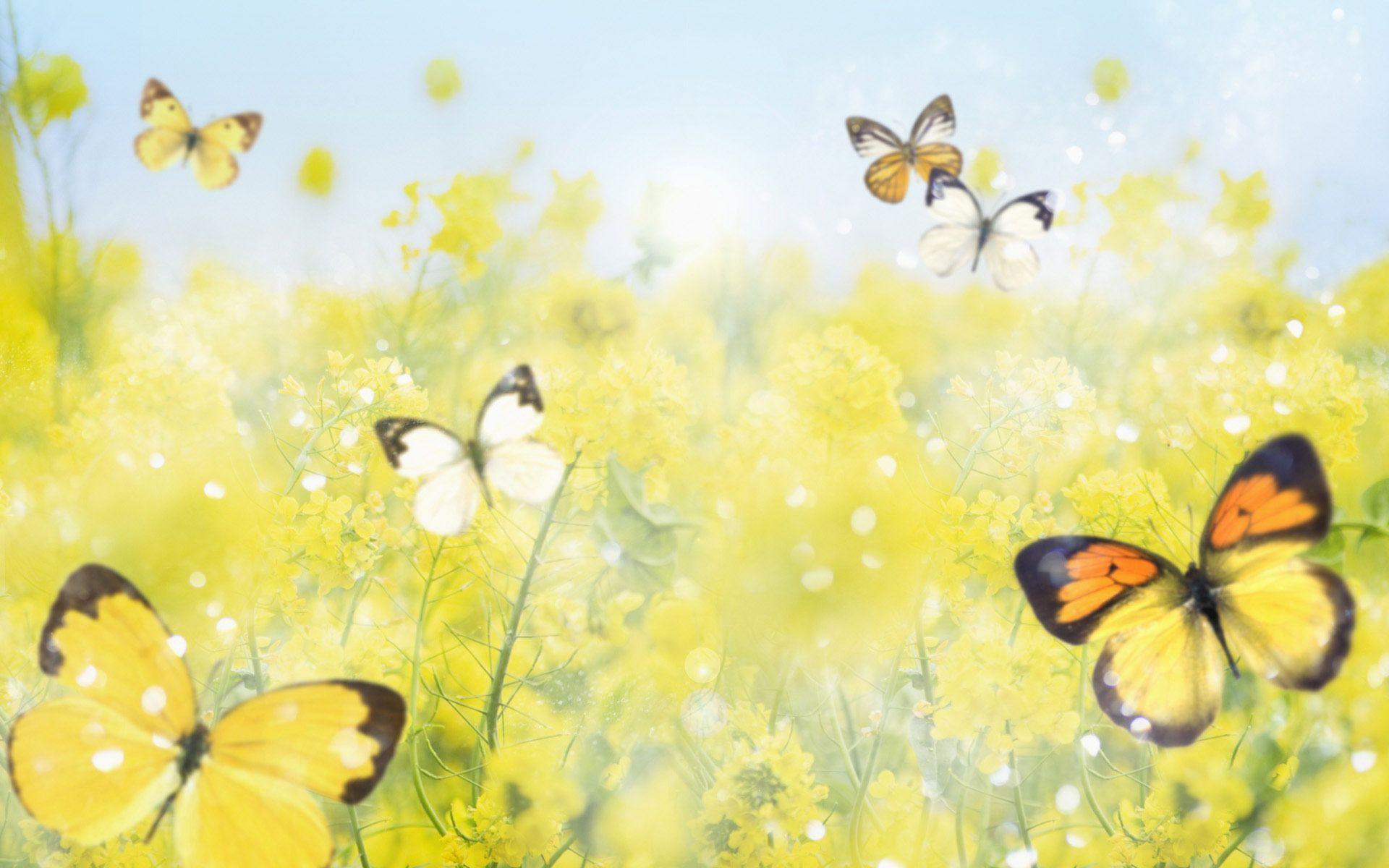 Hình nền con bướm vàng 1920x1200