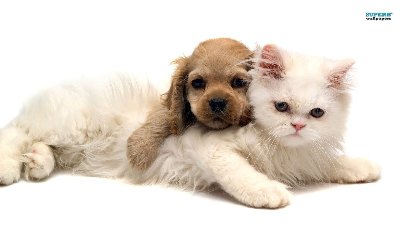 Kitten And Puppy Wallpapers Top Free Kitten And Puppy Backgrounds Wallpaperaccess