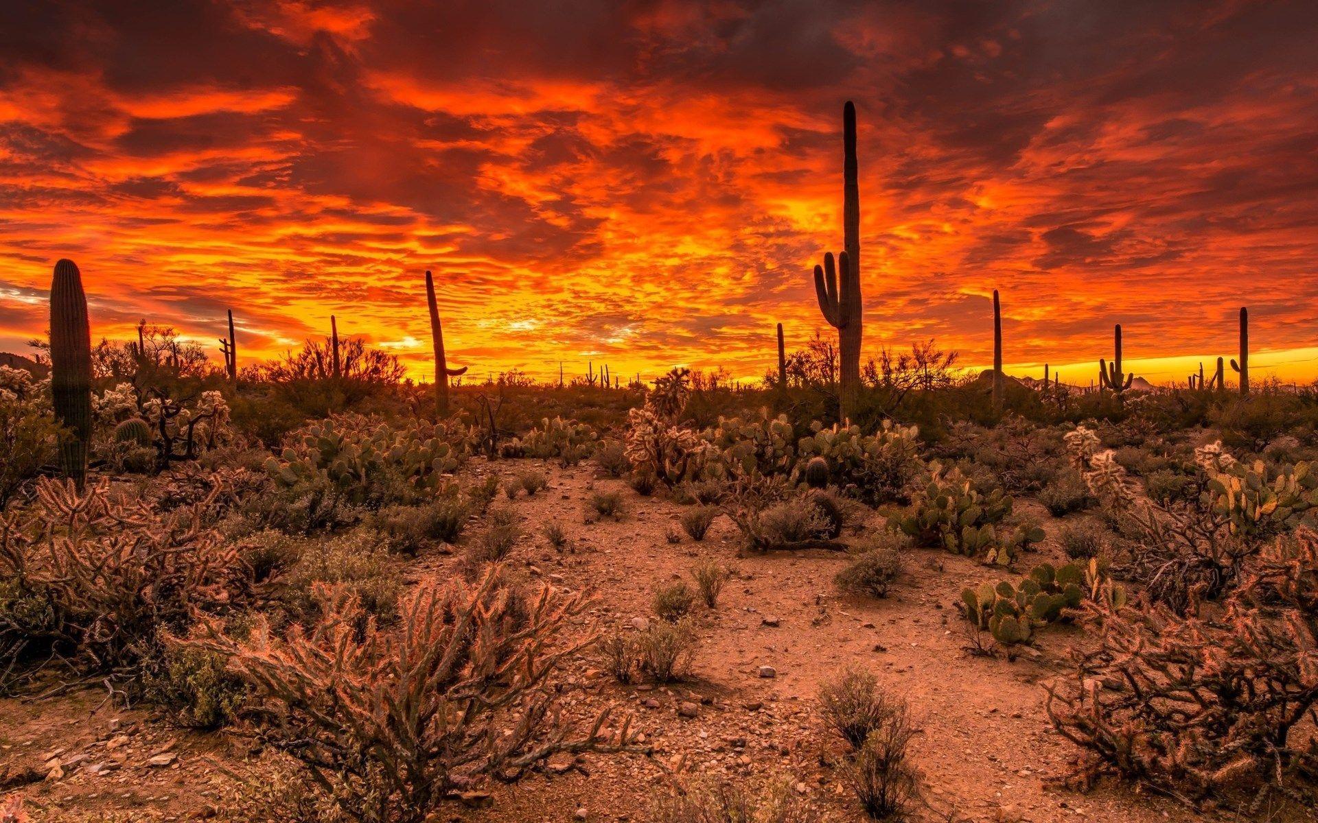 Arizona Desert Wallpapers Top Free Arizona Desert
