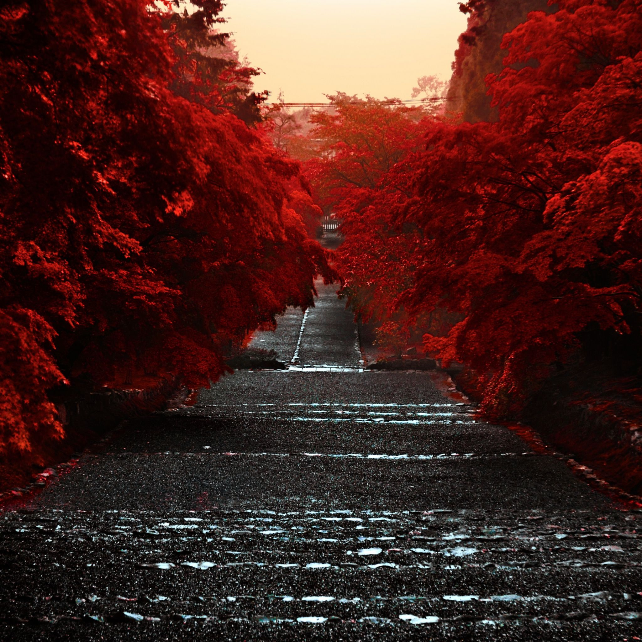 Epic Japanese Nature Wallpapers