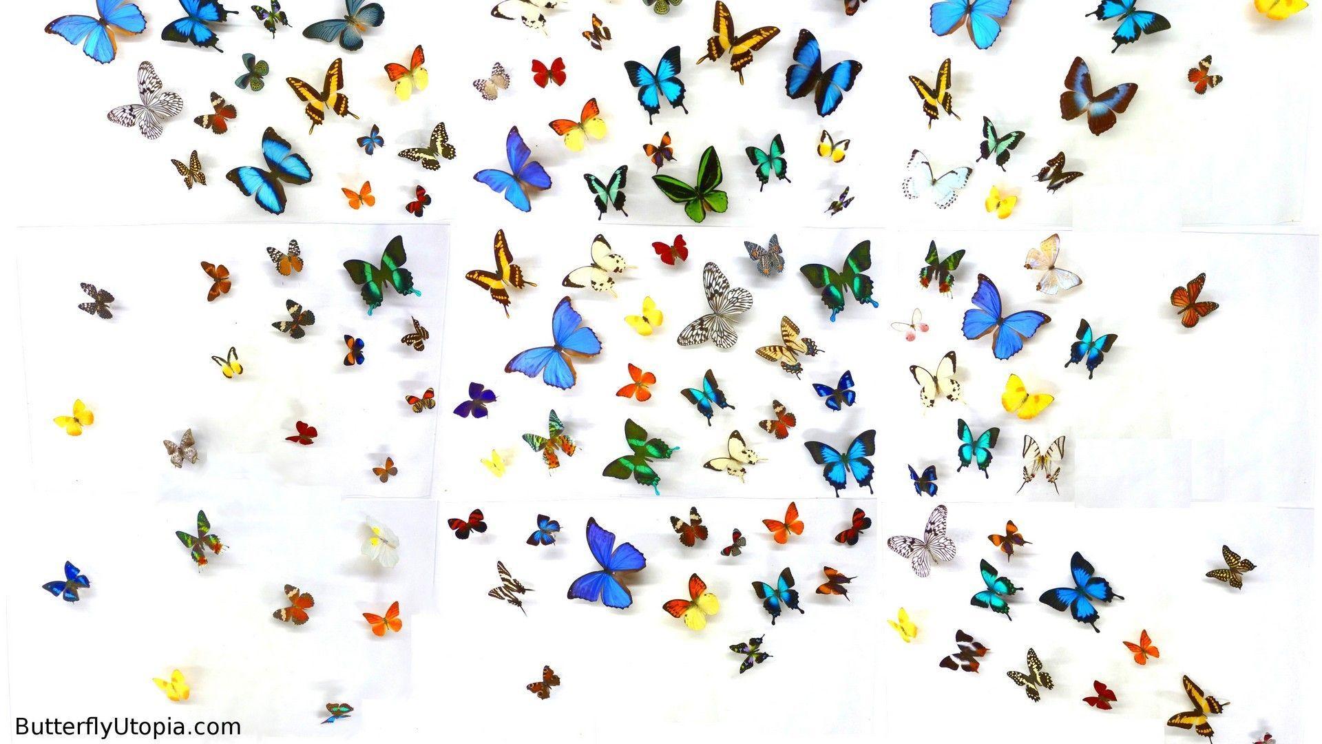 Hình nền con bướm, bướm 1920x1080