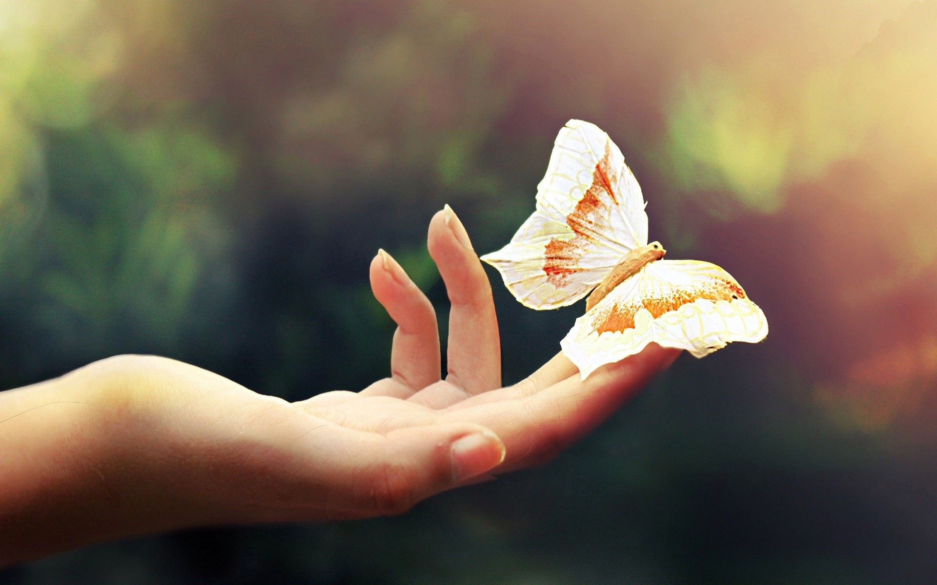 Cute Butterfly Desktop Wallpapers Top Free Cute Butterfly Desktop Backgrounds Wallpaperaccess Download, share or upload your own one! cute butterfly desktop wallpapers top