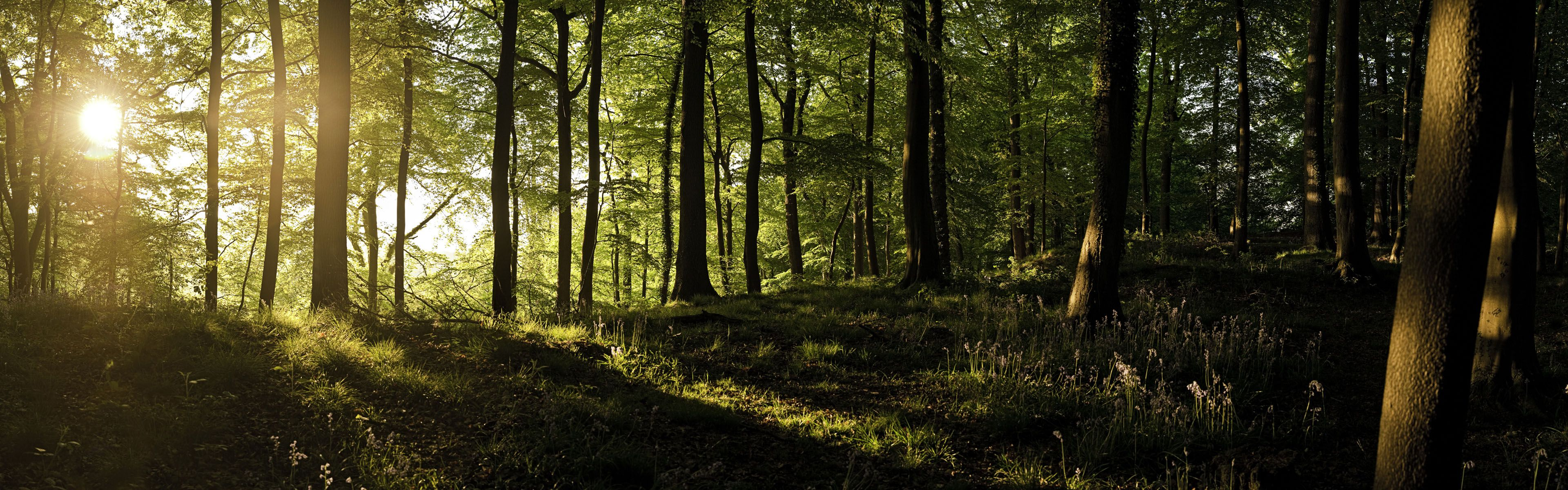 Forest Dual Screen Wallpapers Top Free Forest Dual Screen Backgrounds Wallpaperaccess