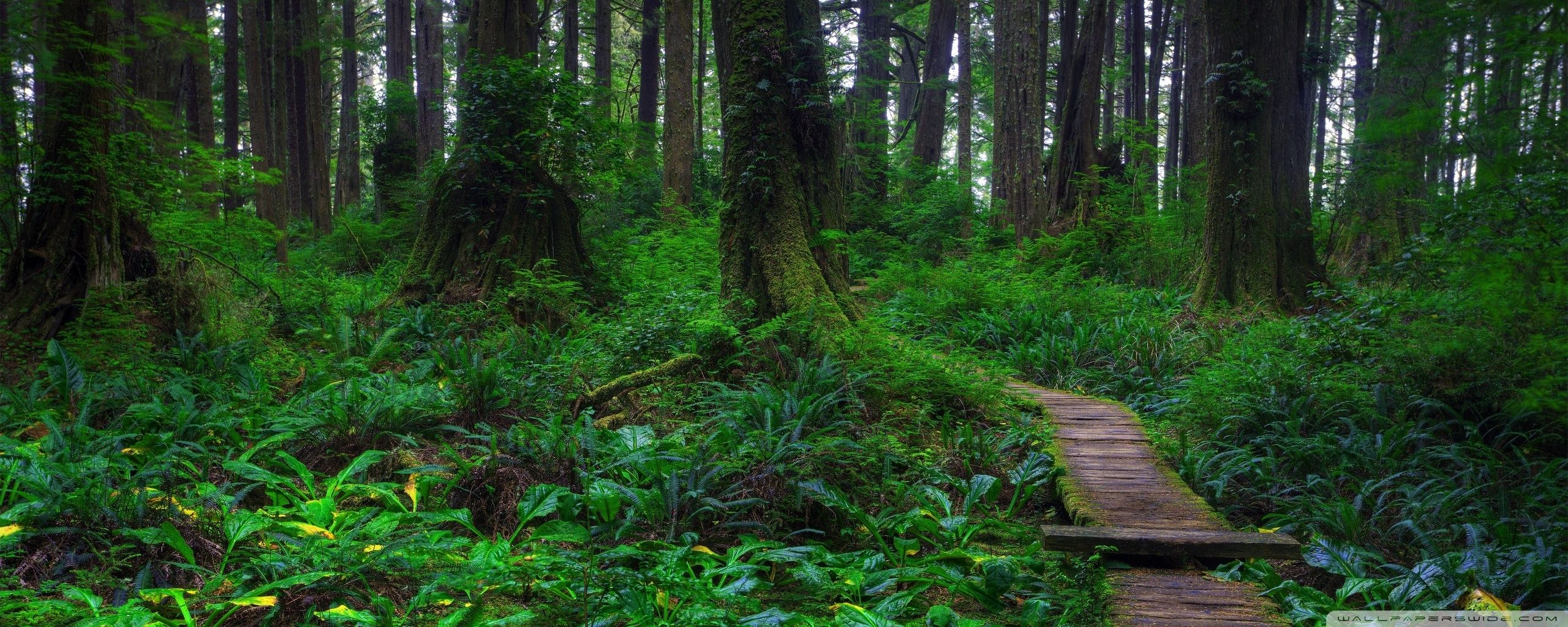 Forest dual screen wallpapers top free forest dual - 4k forest wallpaper ...