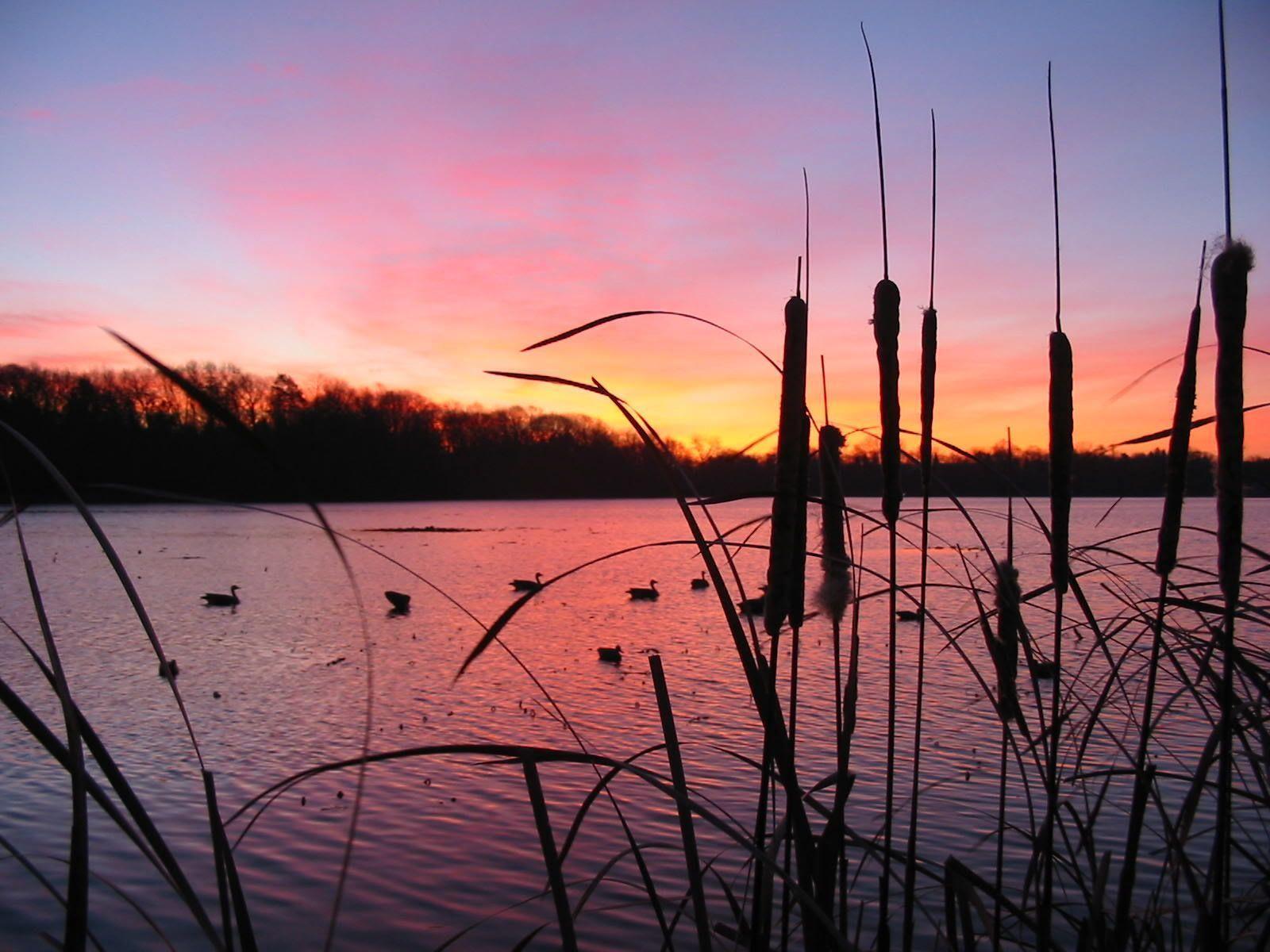 Duck Hunting Desktop Wallpapers Top Free Duck Hunting Desktop Backgrounds Wallpaperaccess