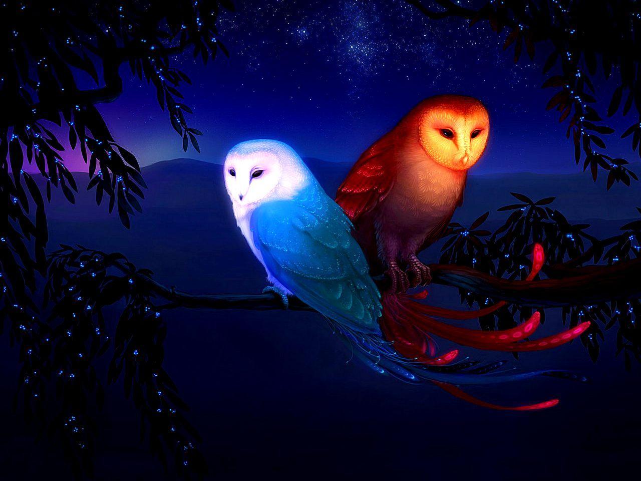 Beautiful Owl Wallpapers Top Free Beautiful Owl Backgrounds Wallpaperaccess
