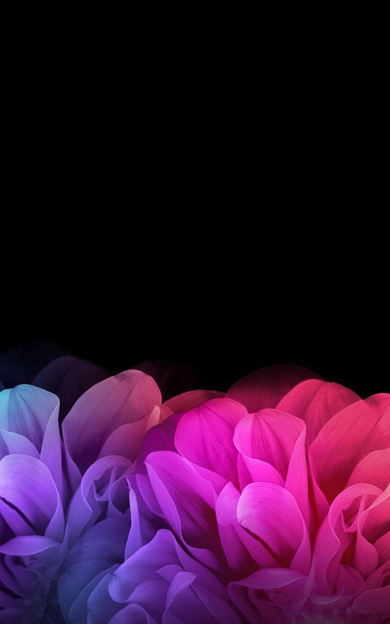 Black And Flower Wallpapers Top Free Black And Flower Backgrounds Wallpaperaccess