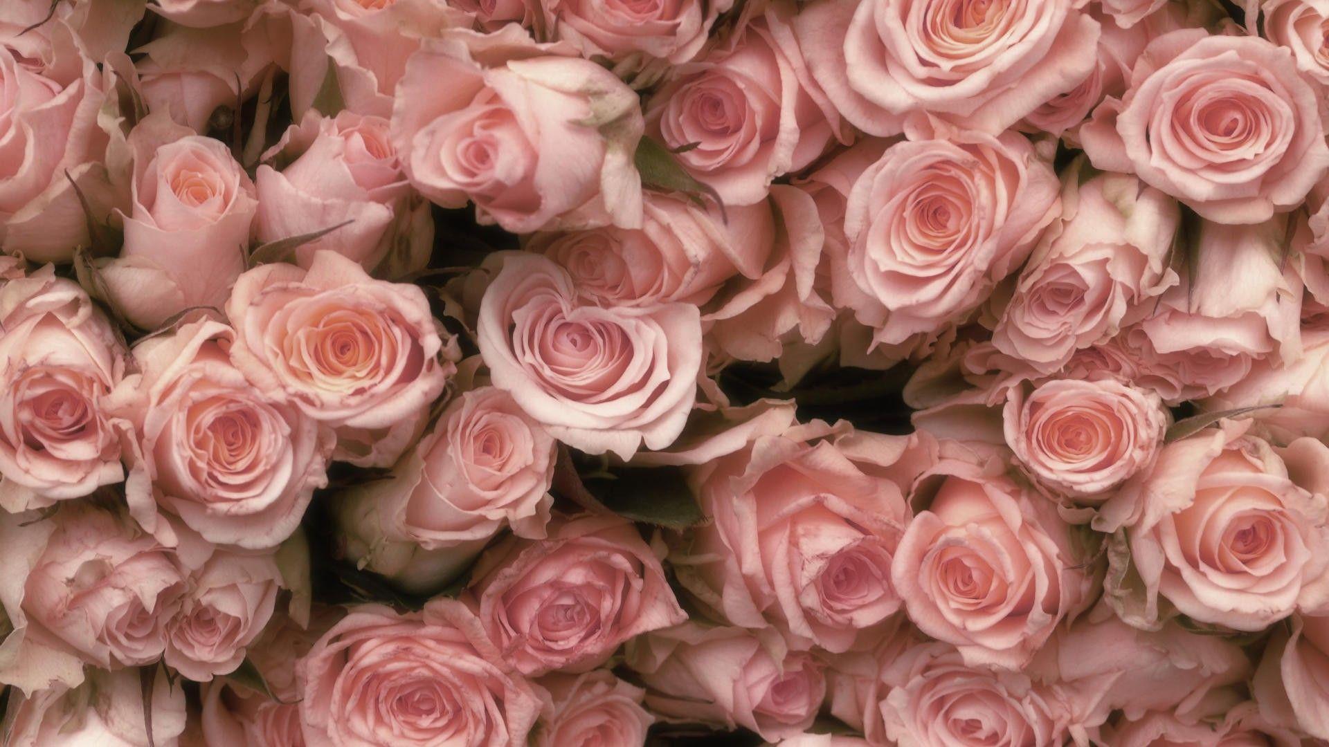 Vintage Rose Wallpapers Top Free Vintage Rose Backgrounds