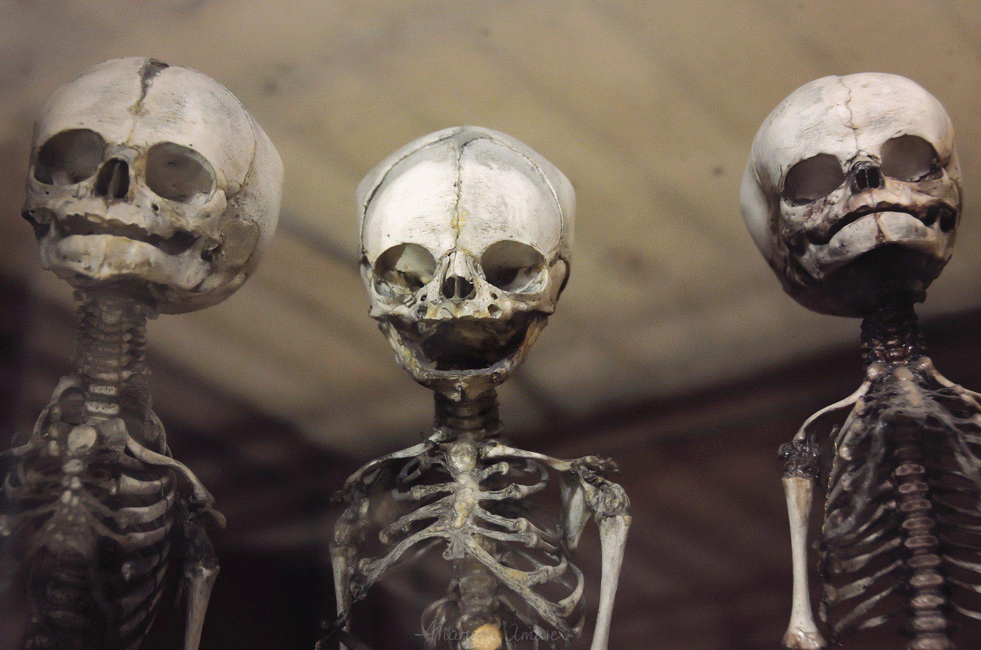 Skeleton wallpapers top free skeleton backgrounds - Skeleton wallpaper ...