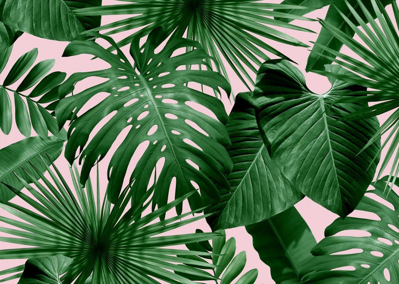 Palm Leaves Desktop Wallpapers - Top Free Palm Leaves ...