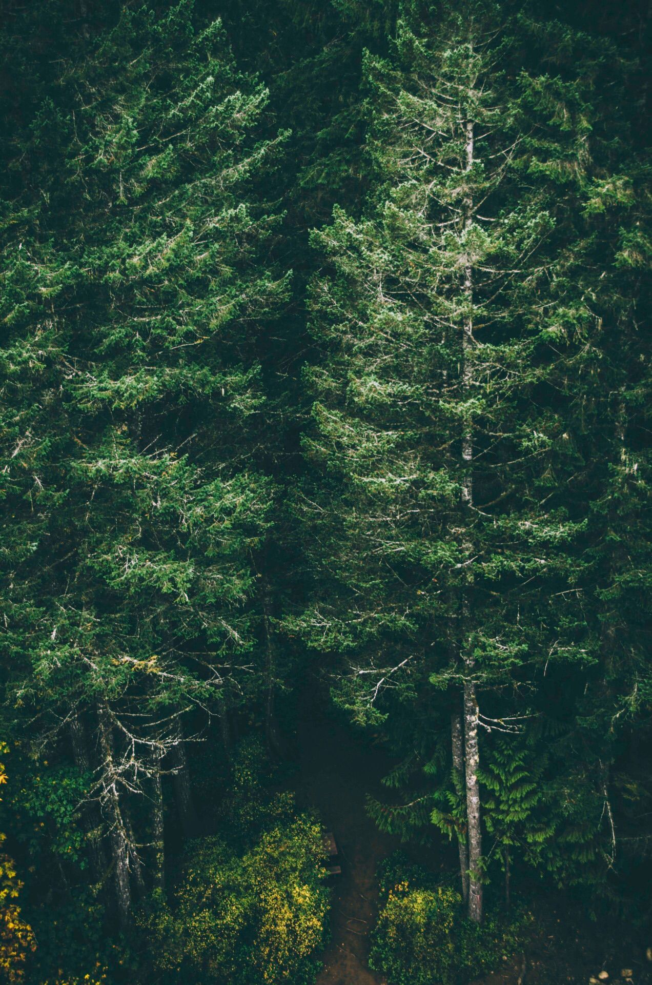 Green Forest Iphone Wallpaper