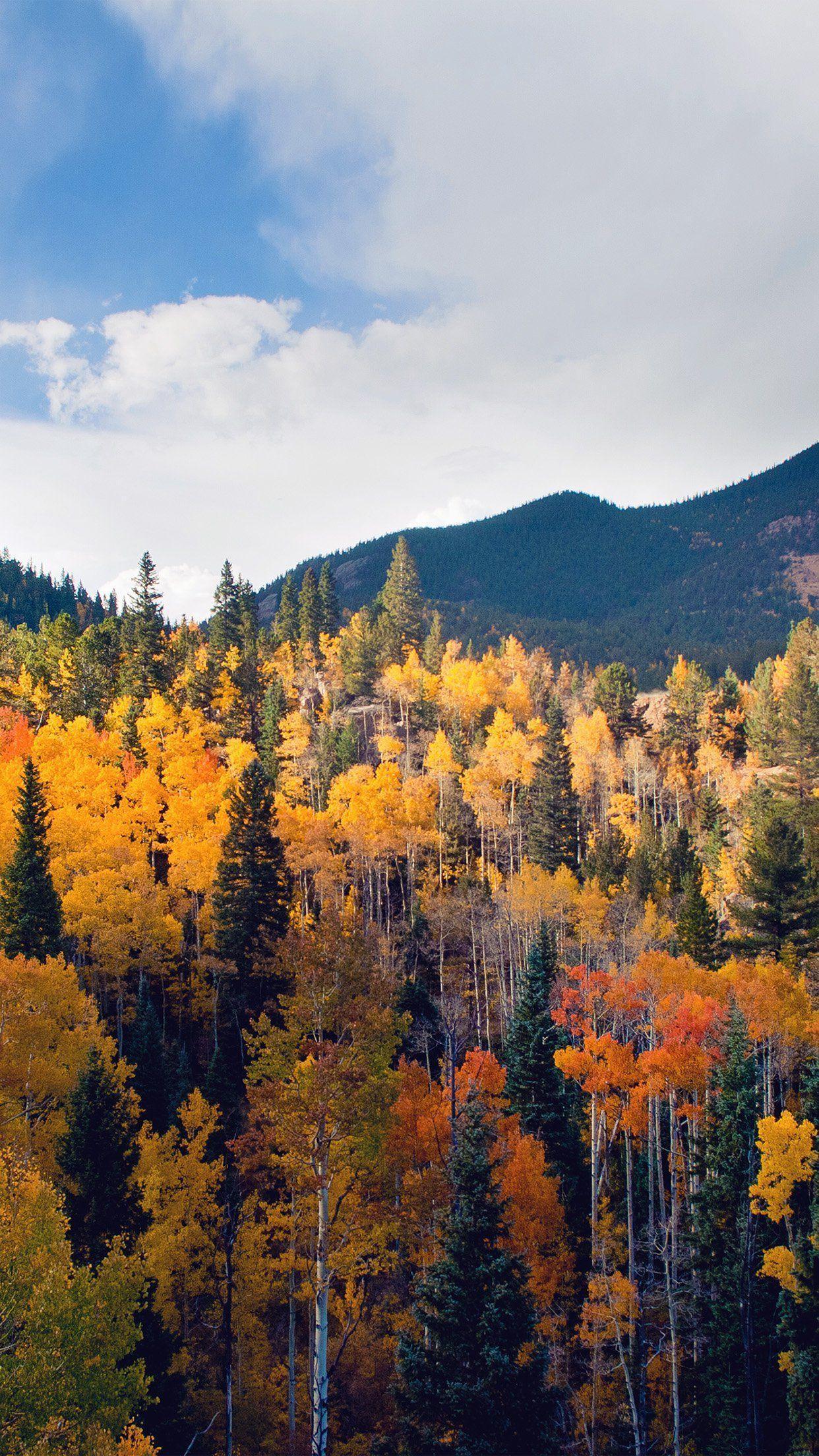 1242x2208 Mùa thu Thiên nhiên Núi Rừng Rừng cây Bầu trời Mùa hè #iPhone #plus