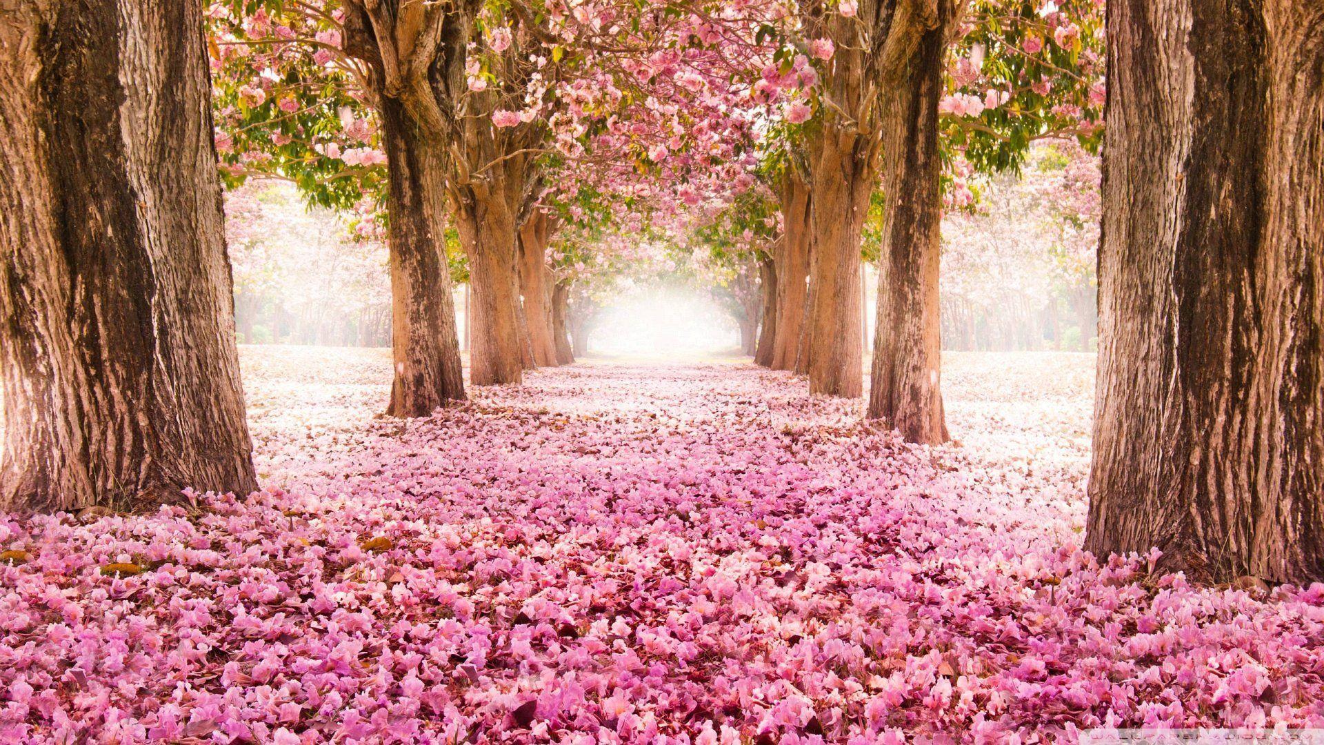 6400 Koleksi Romantic Nature Hd Wallpaper Gratis