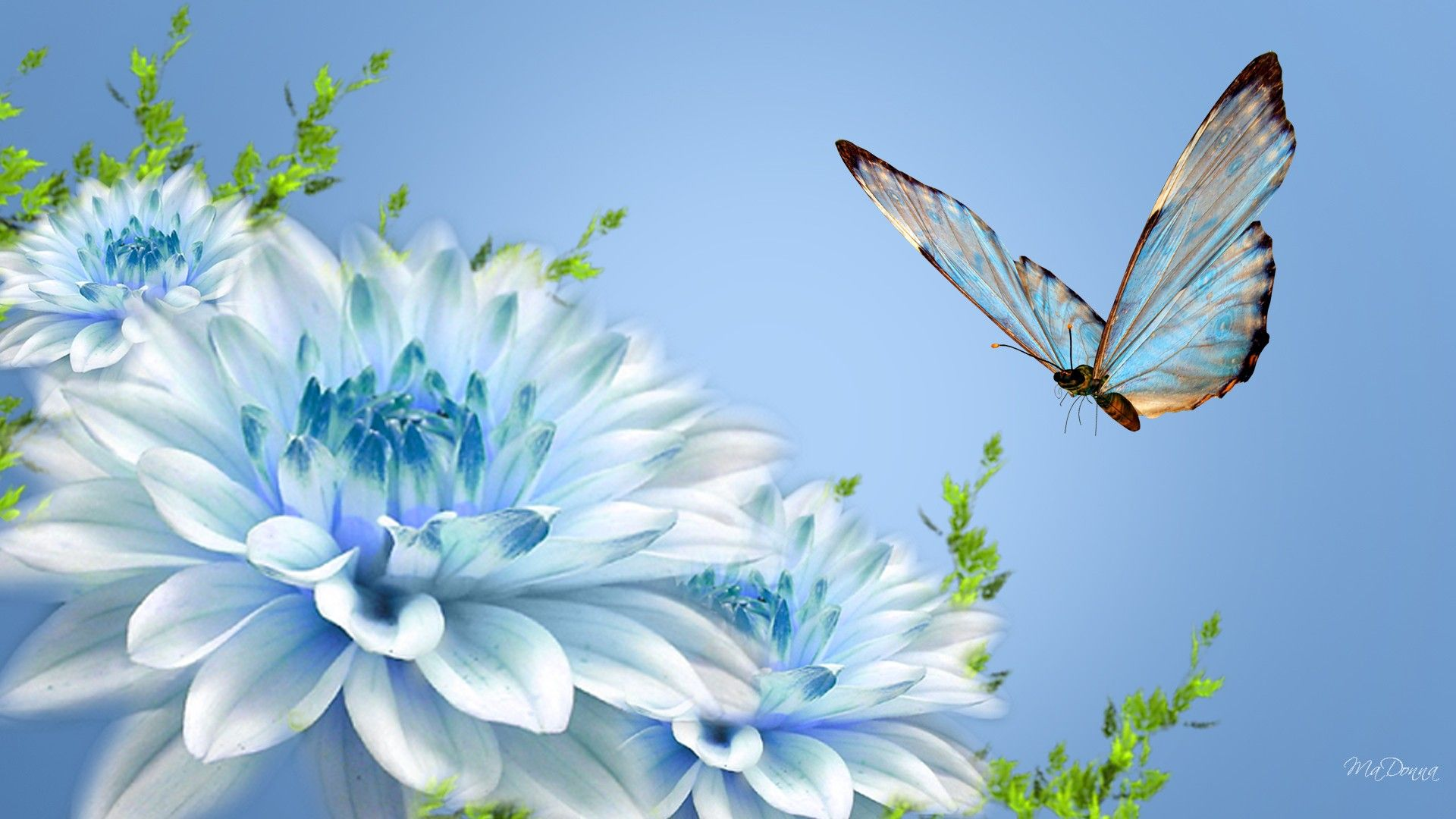 Spring Butterfly Wallpapers - Top Free Spring Butterfly ...