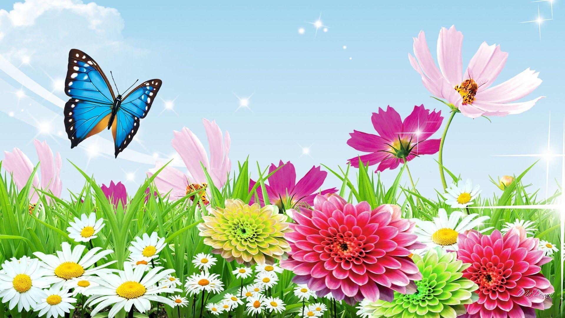 1920x1080 Hình nền bướm mùa xuân Hình nền màn hình rộng ngoài trời 1080p