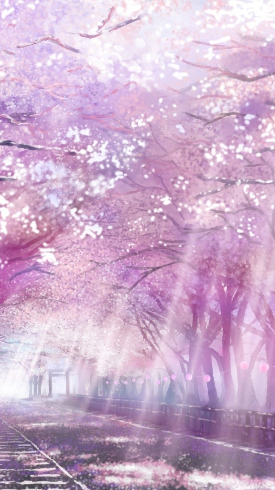 Cherry Blossoms Anime Scenery Wallpapers Top Free Cherry