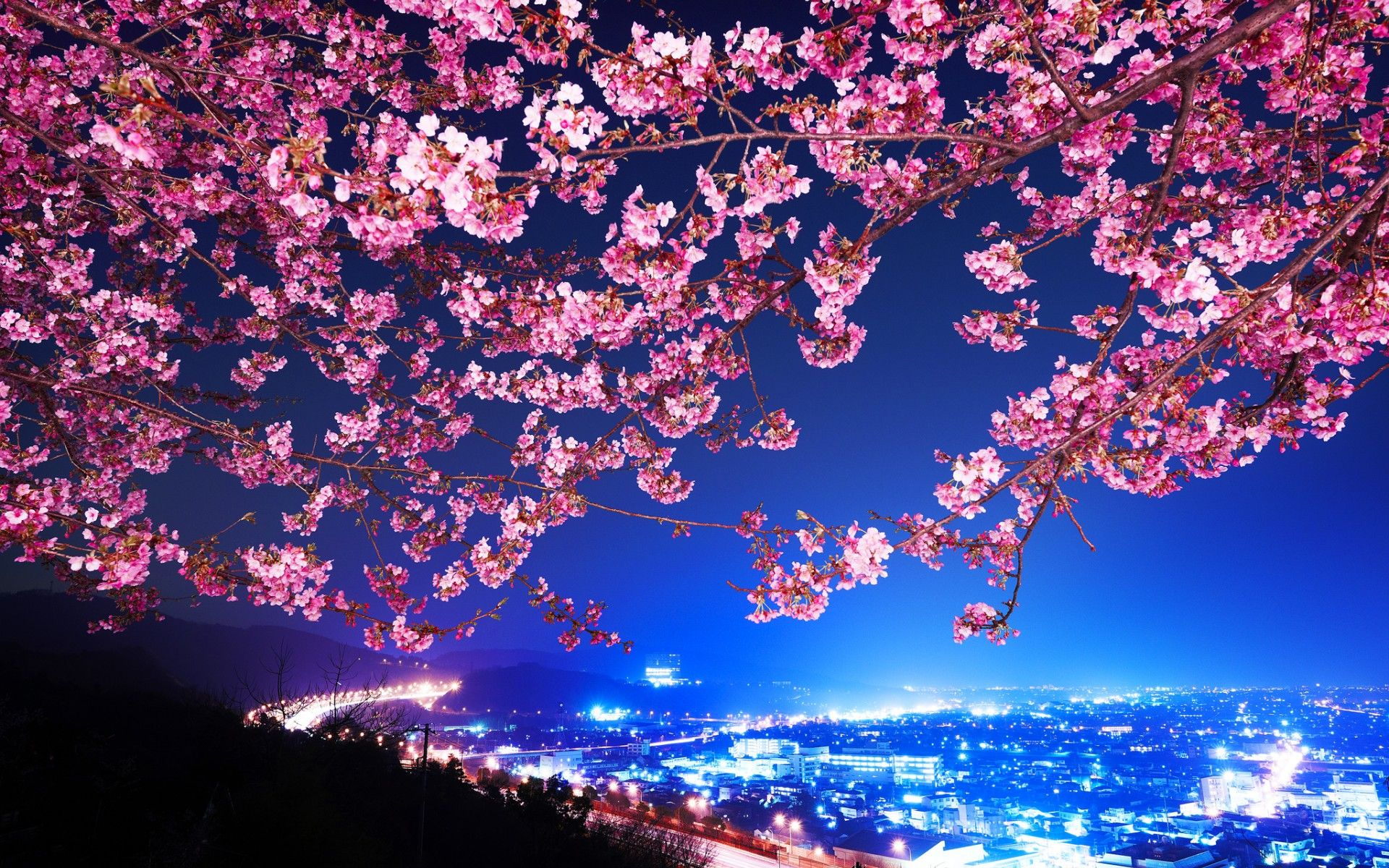 Cherry Blossom Tree At Night Wallpapers Top Free Cherry Blossom Tree At Night Backgrounds Wallpaperaccess