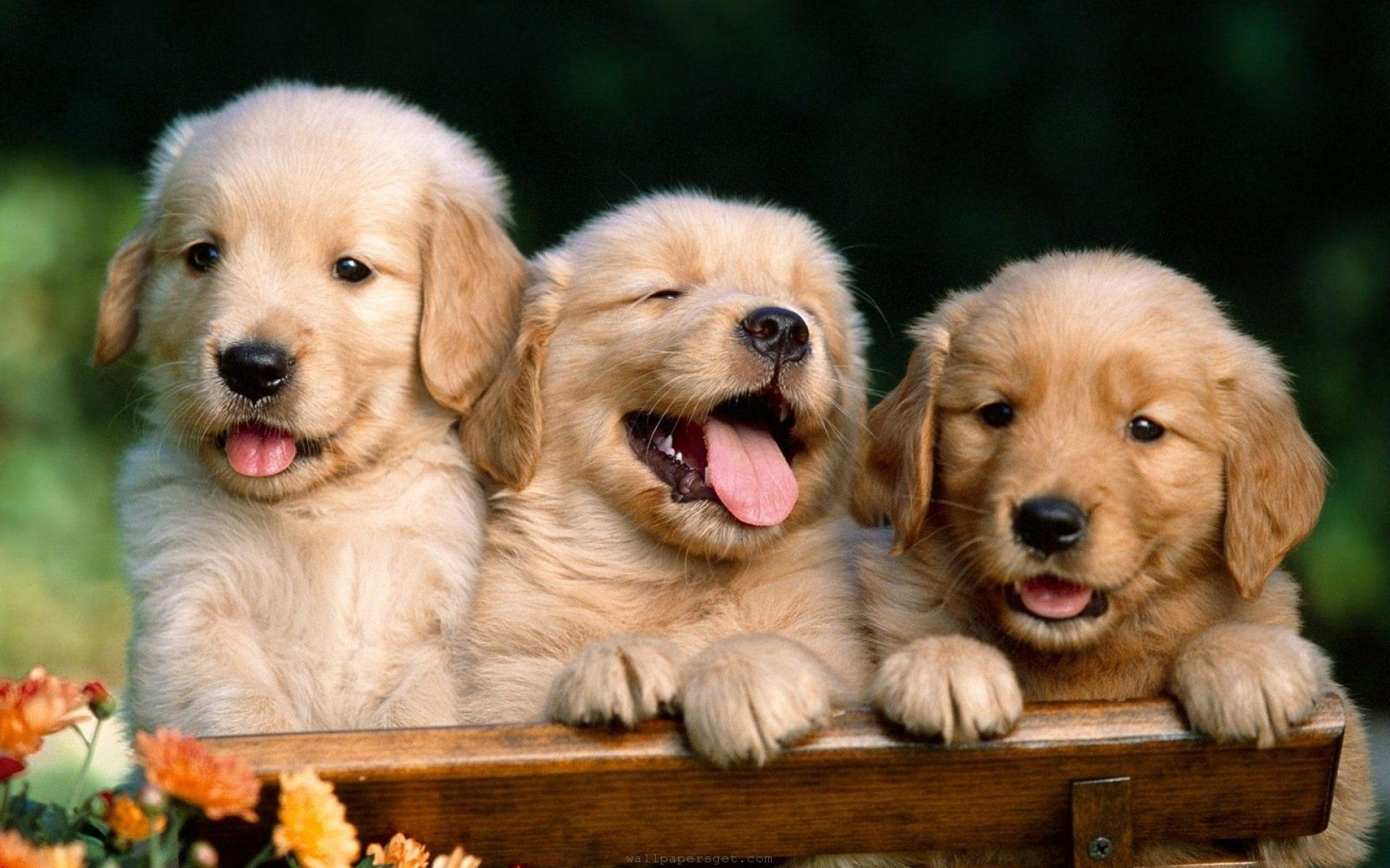 Cute Dog Wallpapers Top Free Cute Dog Backgrounds