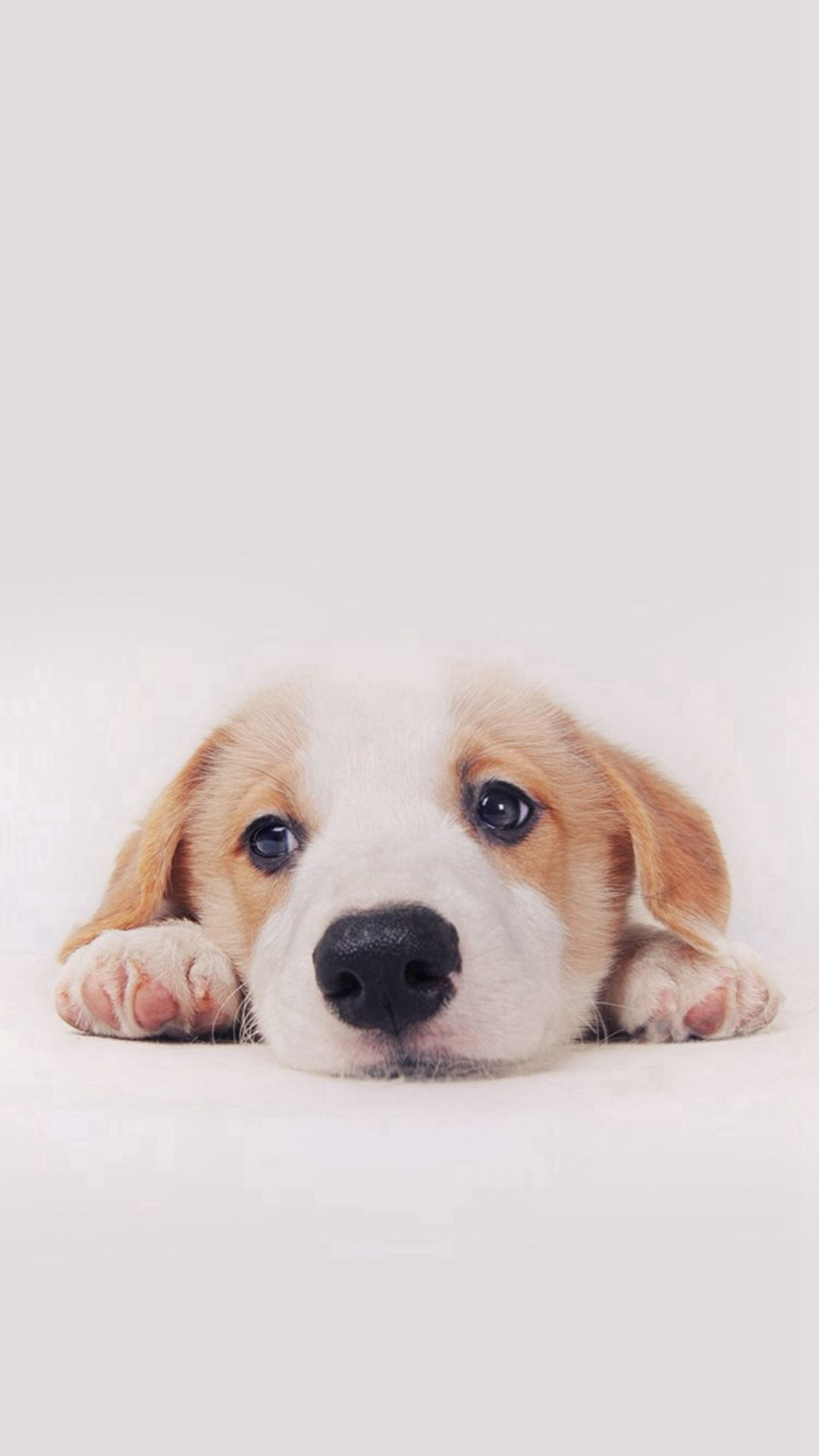 "3840x2160 Cute Puppy Wallpaper High Quality Resolution Just Free Wallpaper ..."">"