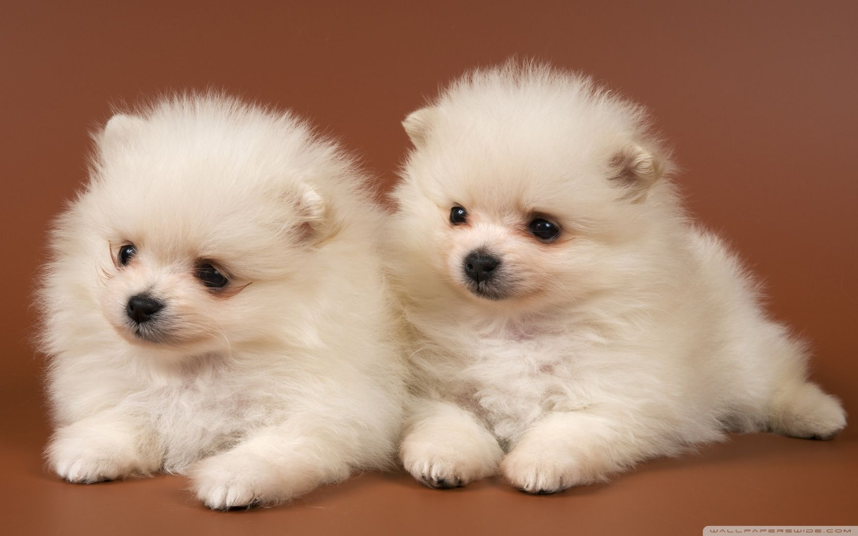66 Best Free Cute Dog Wallpapers Wallpaperaccess