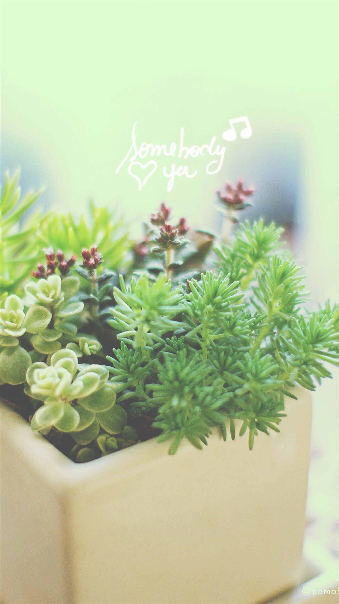 1080x1920 Nature Vitality Aesthetic Fleshy Plant Pot Hình nền iPhone 8