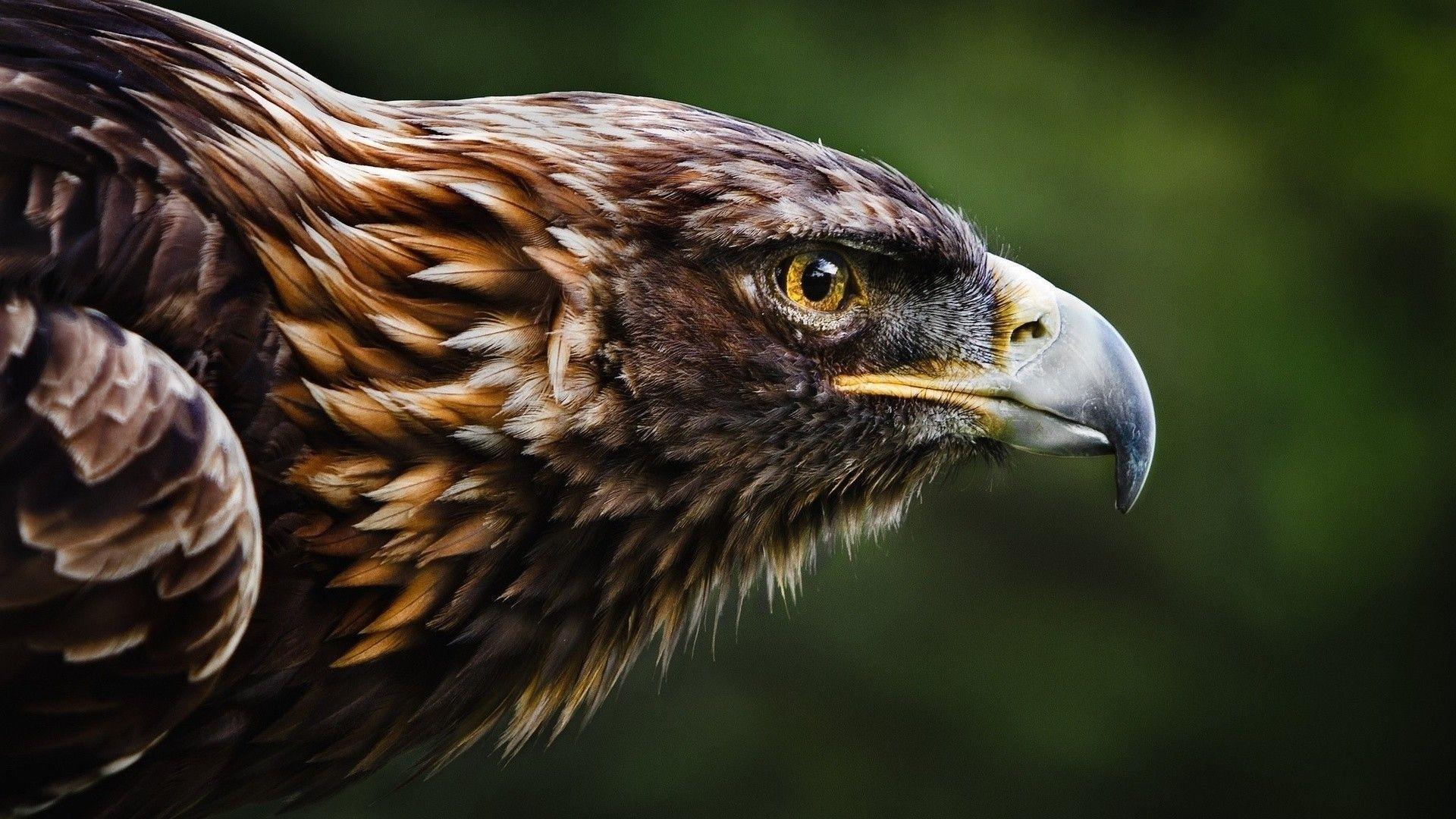 Eagles 4K Ultra HD Wallpapers - Top Free Eagles 4K Ultra ...