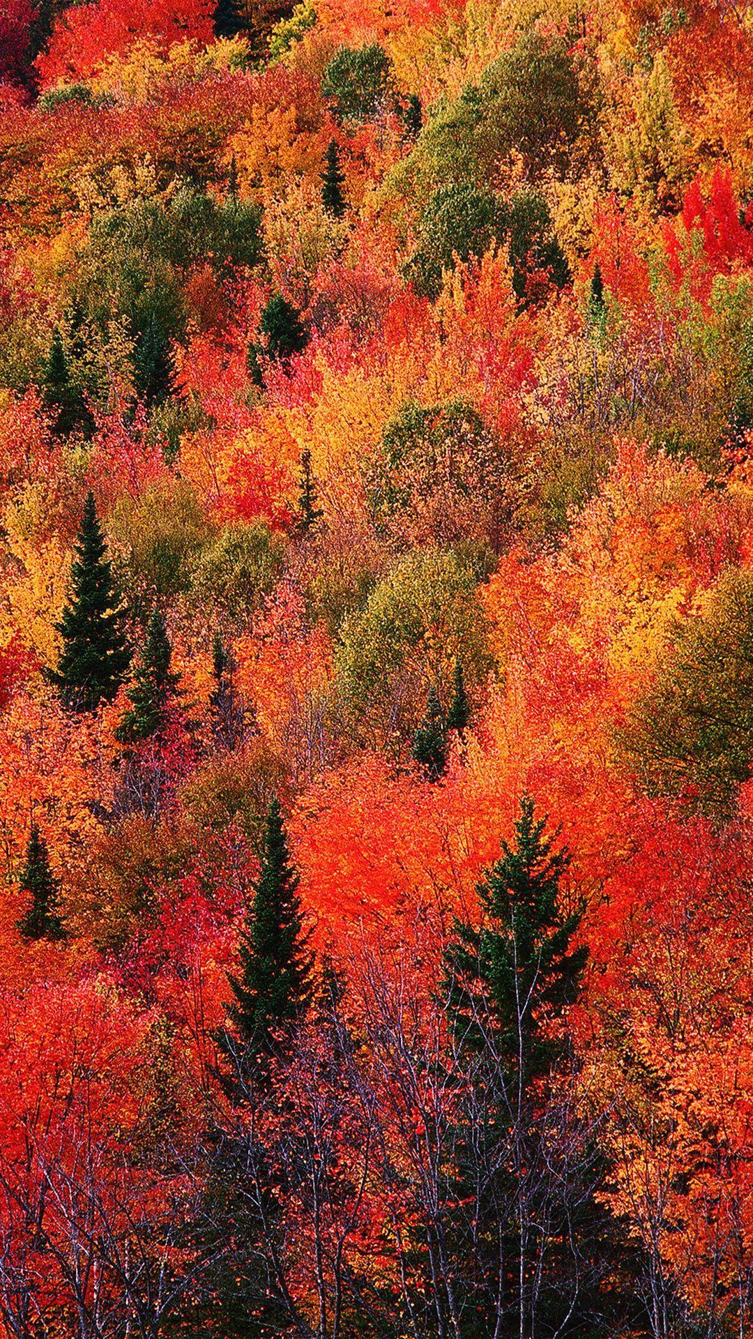 1080x1920 Hít thở và Hình nền mùa thu đẹp nhất cho iPhone của bạn.  Chia sẻ tin tức